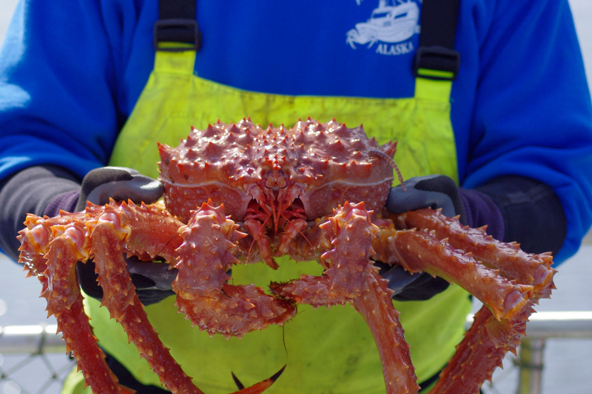 King Crab in Alaska 2020 - Best Time