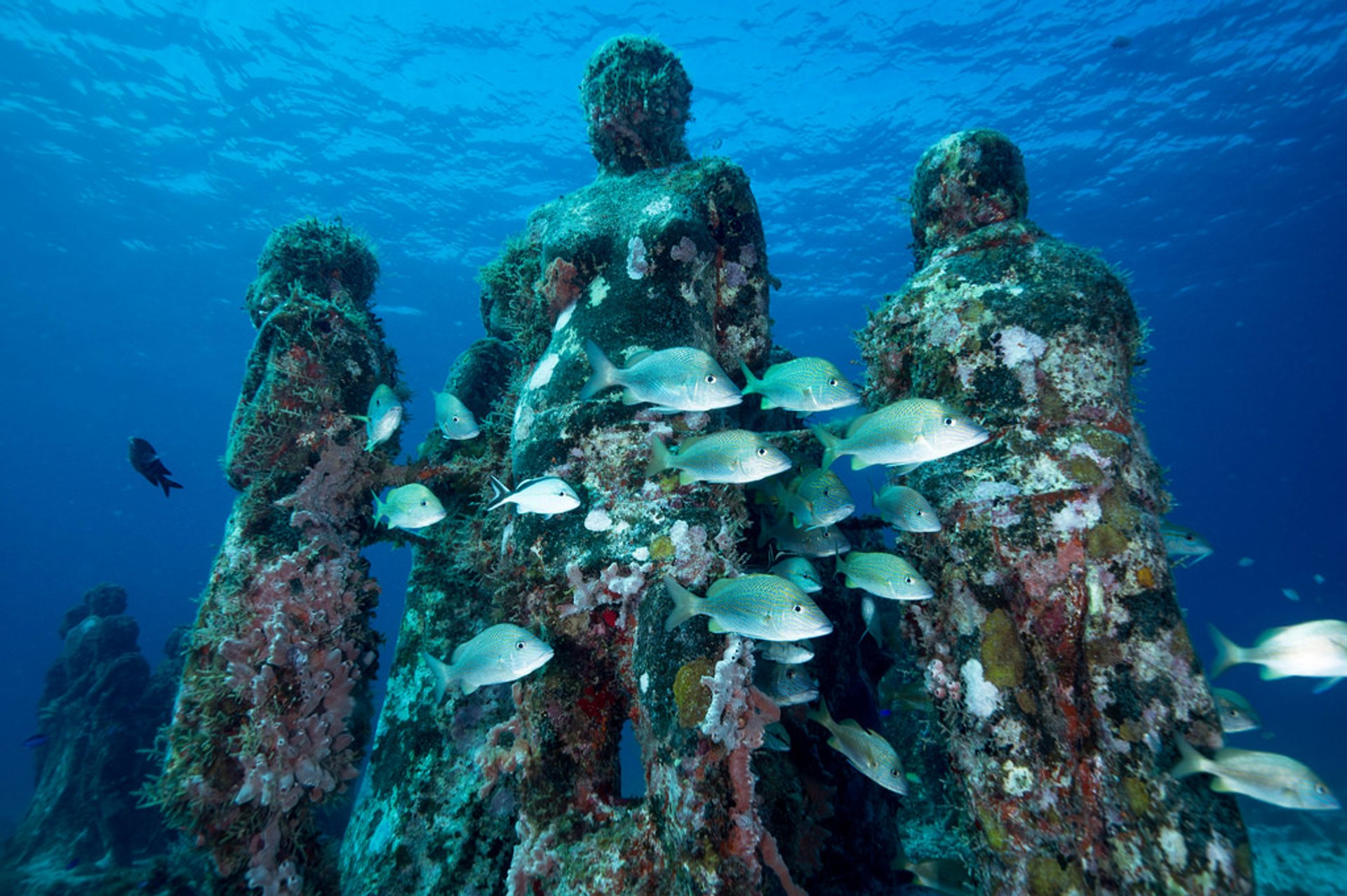 Diving on Isla Mujeres, MX, August 2015 2019
