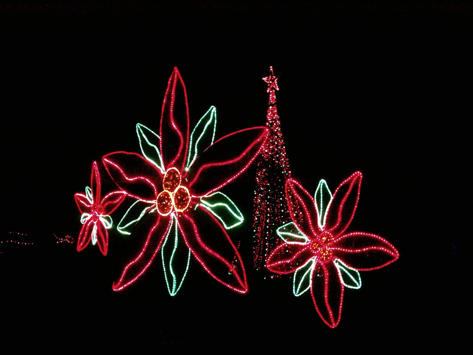 Holiday Lights at Garvan Woodland Gardens 2020