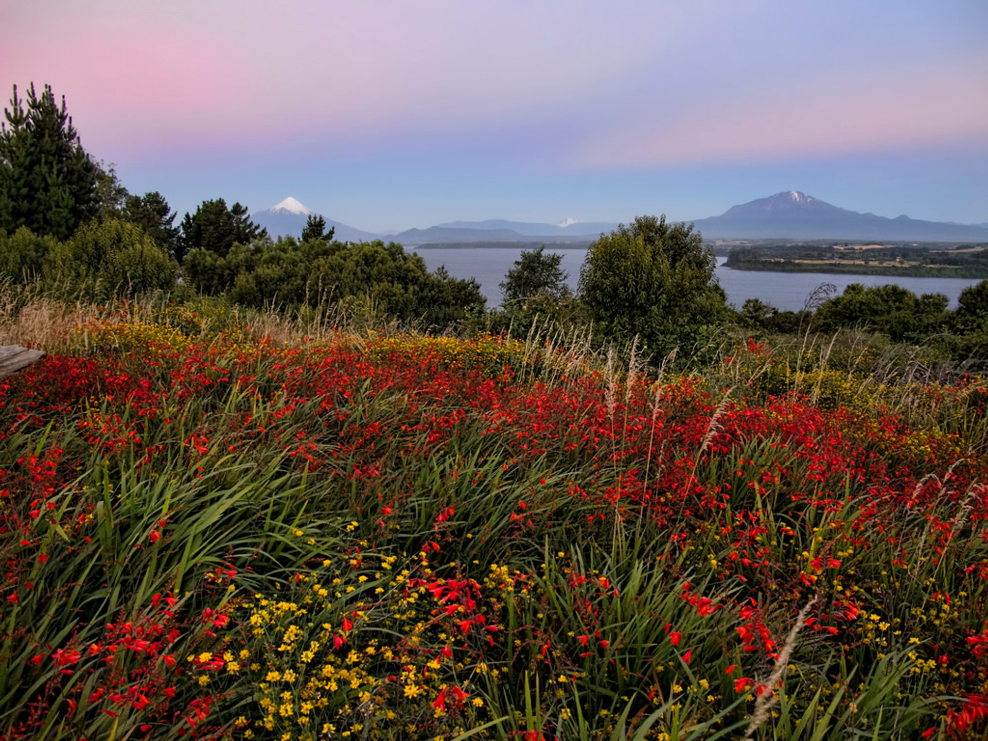 Wildflowers of Patagonia in Chile 2020 - Best Time