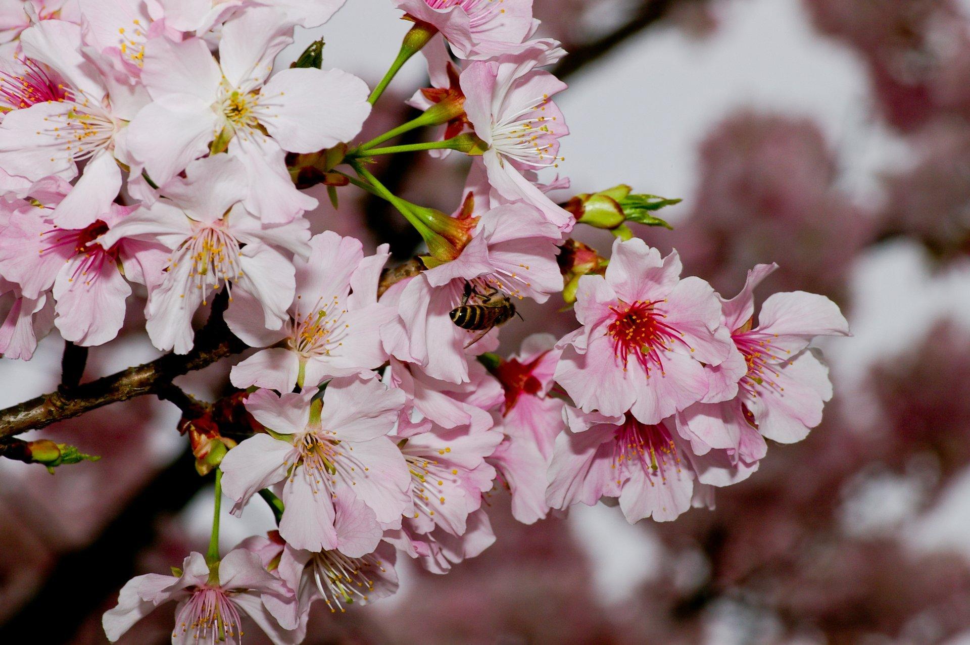 Yangmingshan Flower Season in Taiwan 2019 - Best Time