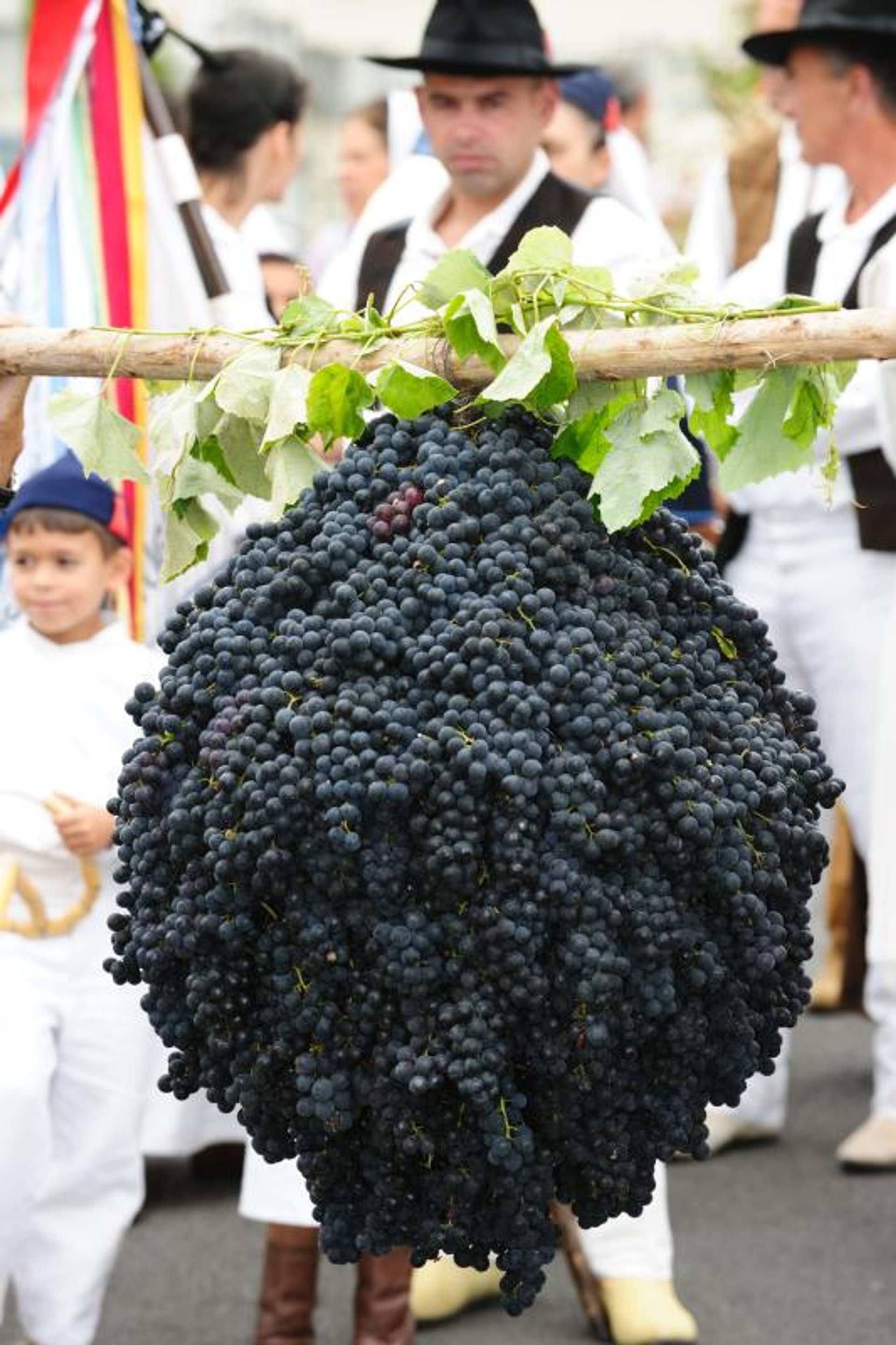 Best time for Madeira Wine in Madeira 2020