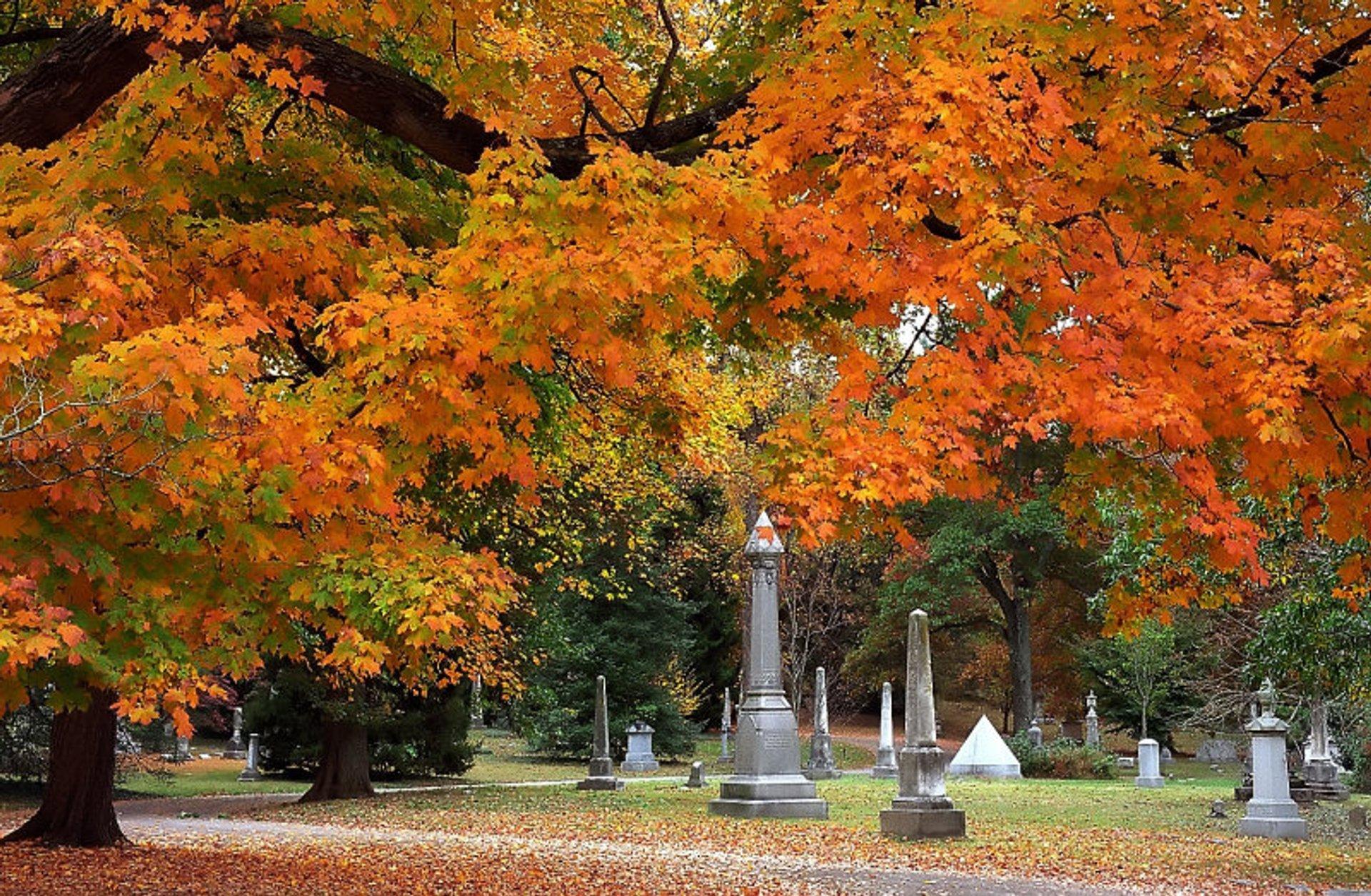Autumn walk at Spring Grove Cemetery & Arboretum 2020