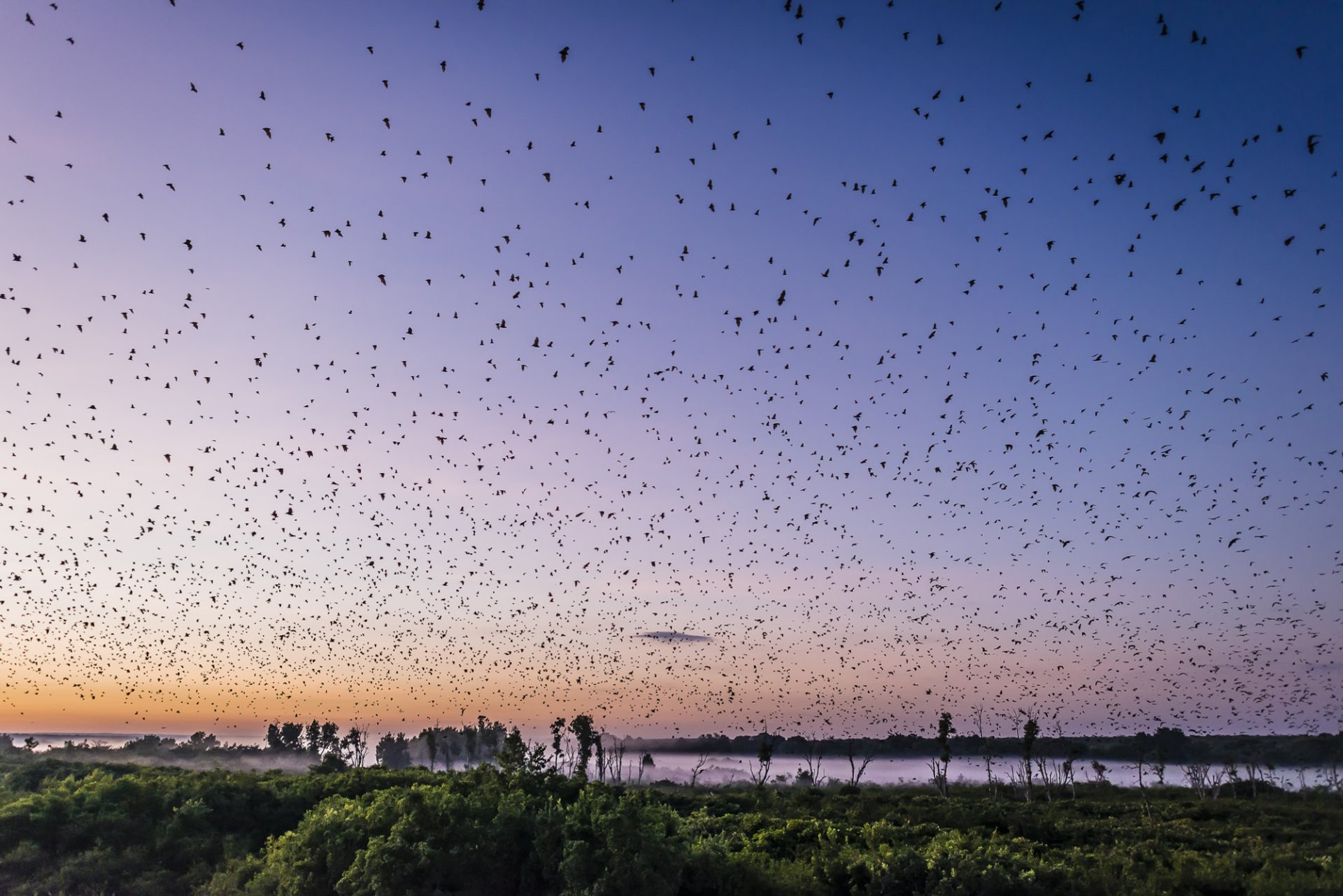 Best time for Bat Migration in Zambia 2020