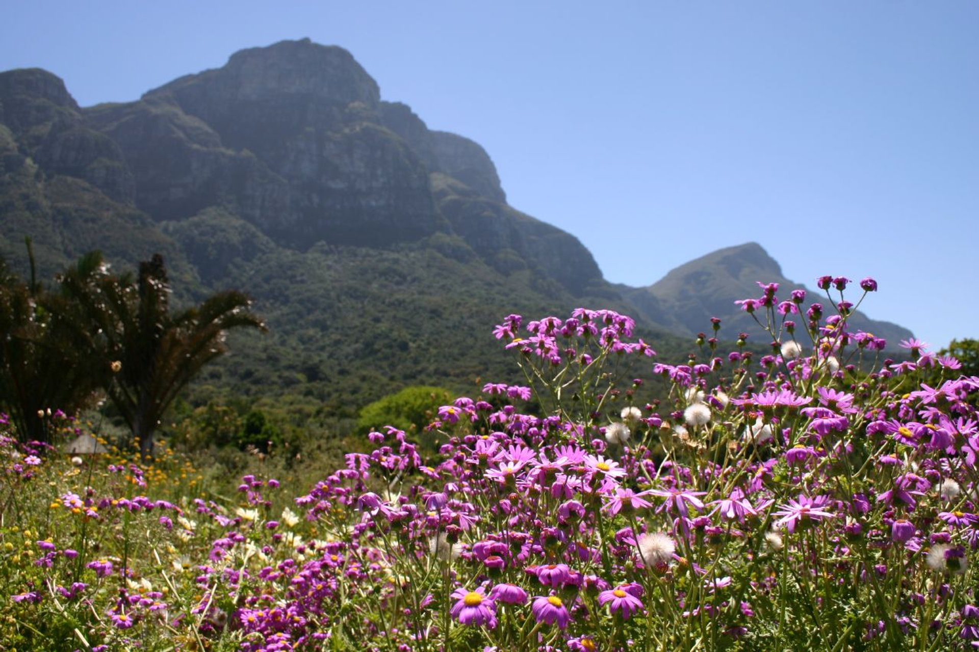 Wild Flowers in Bloom in Cape Town - Best Season