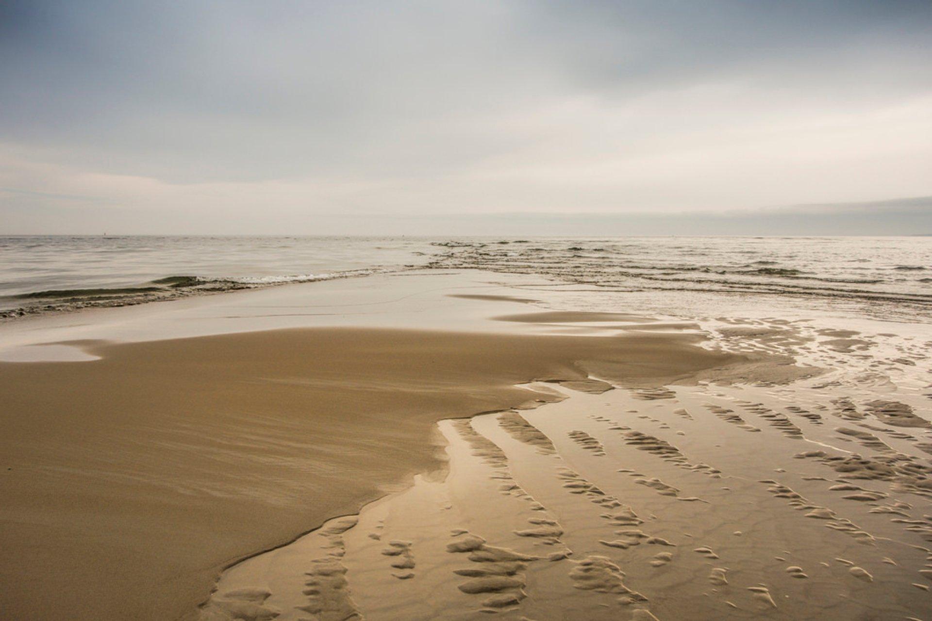 Crane Beach, Ipswich 2019