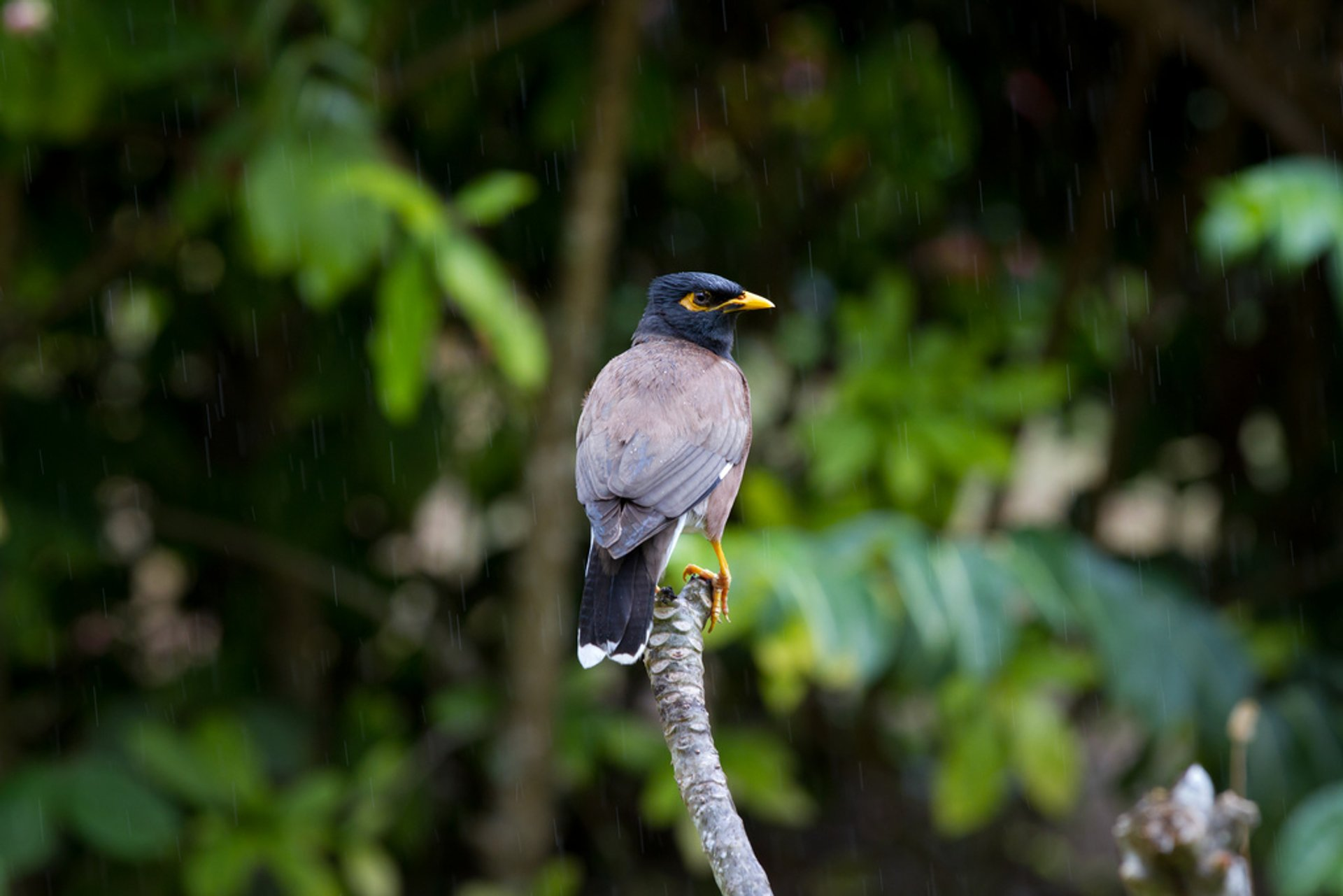 Birdwatching during Breeding Season in Rarotonga & Cook Islands 2020 - Best Time