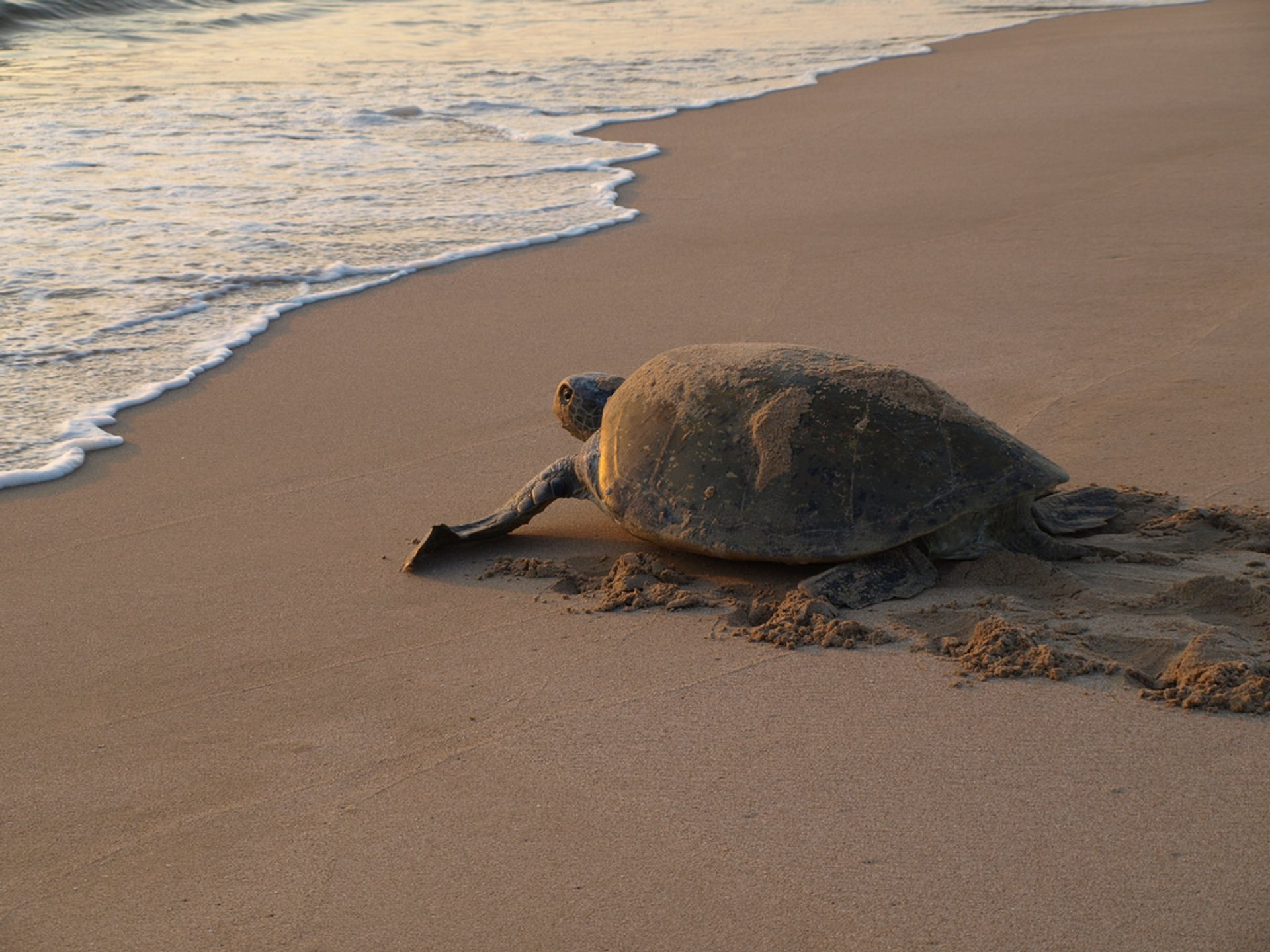 Turtle Nesting and Hatching in Oman - Best Time