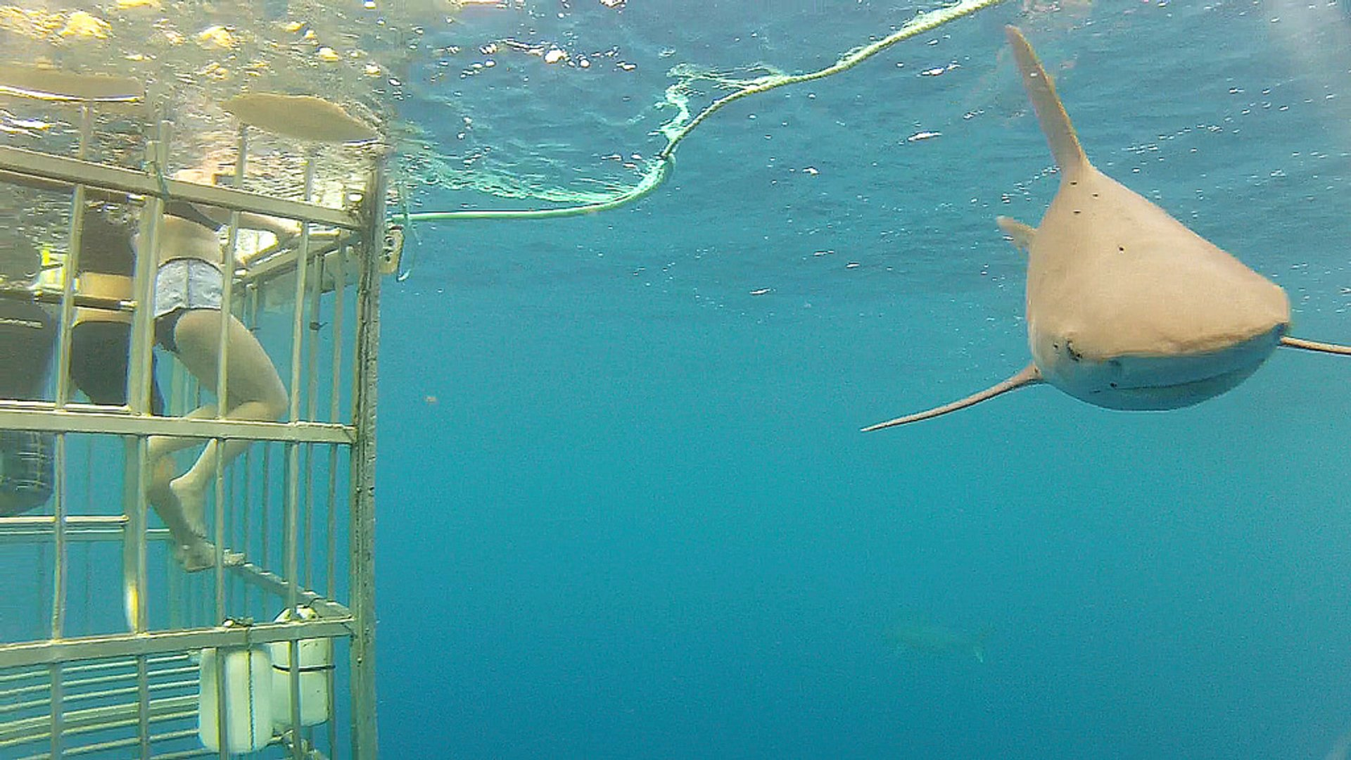 Shark Cage Dive, Haleiwa, Hawaii 2020