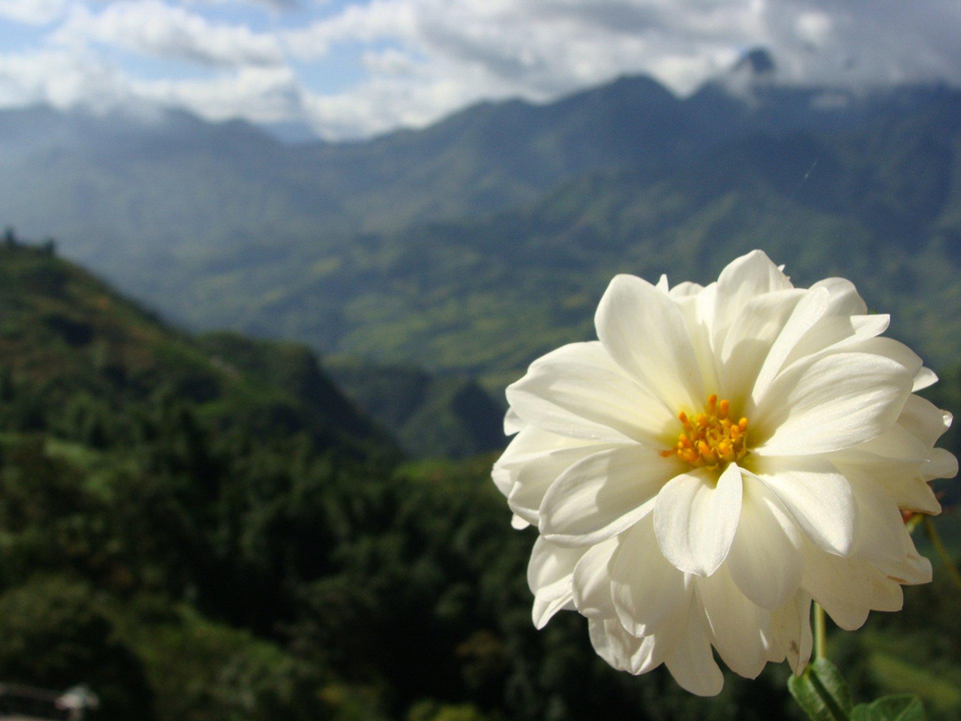 Sa Pa Flowers Bloom Season in Vietnam - Best Time