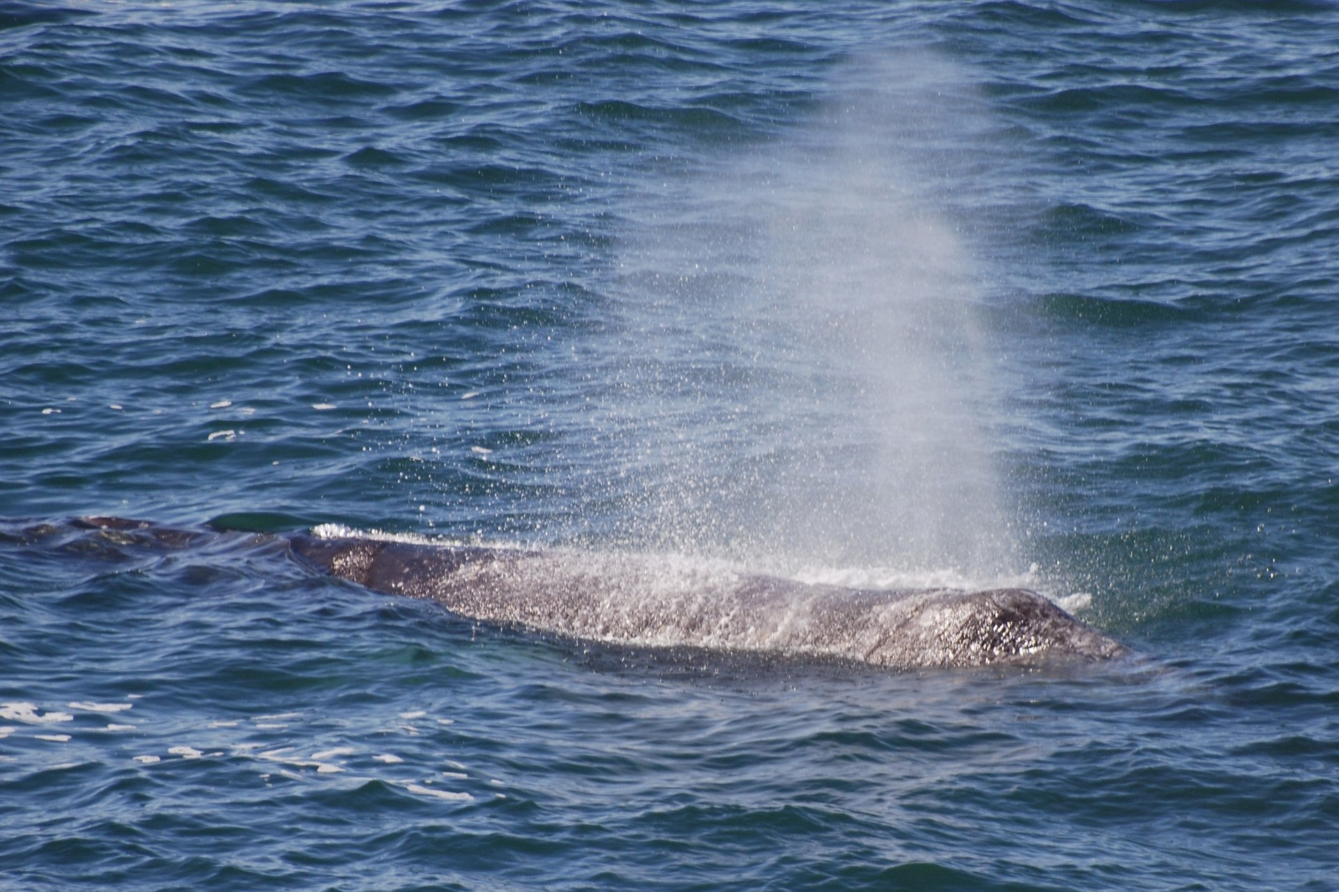 Whale Watching in Oregon - Best Season 2020