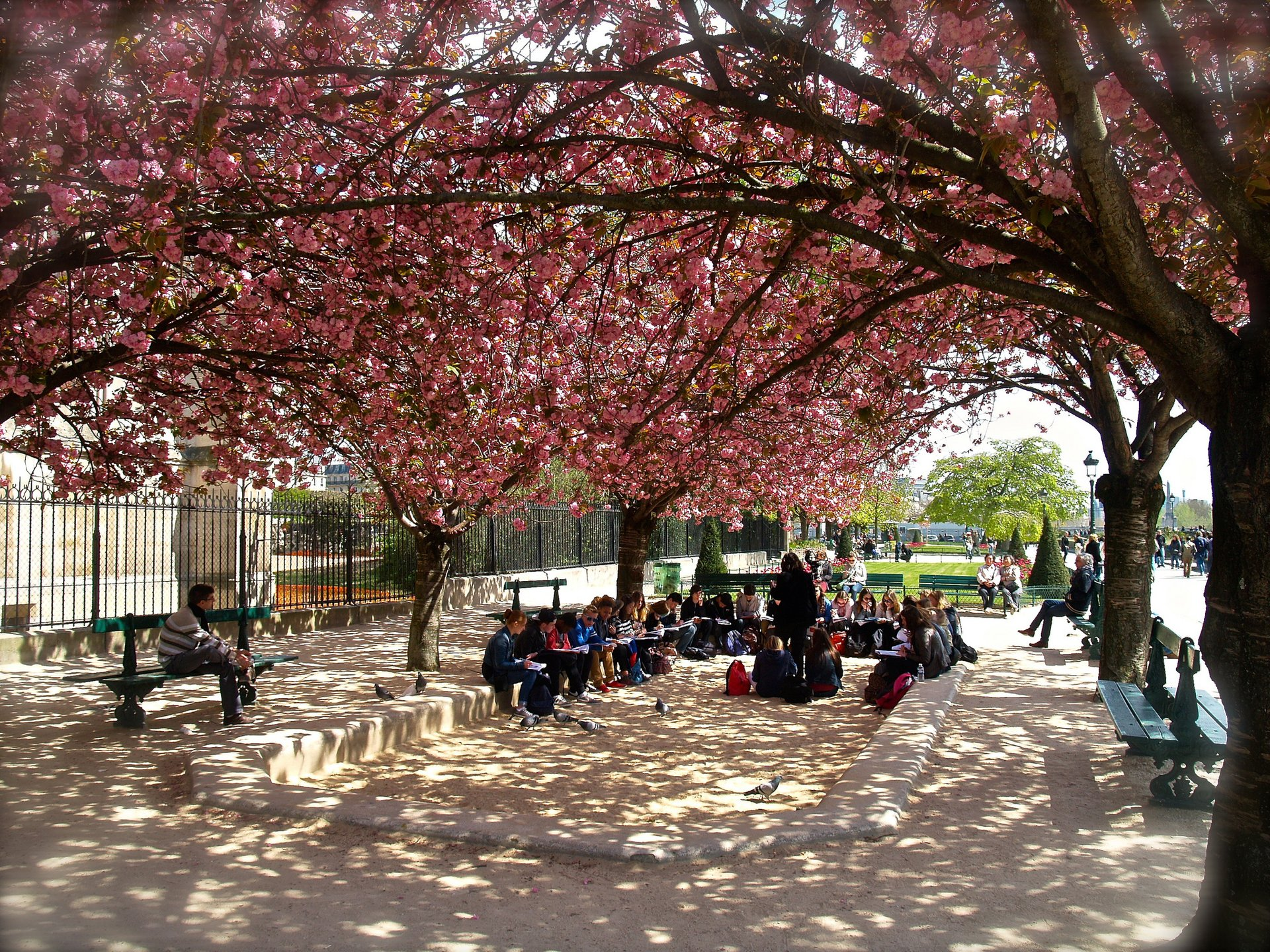 Best time for Cherry Blossom in Paris 2020