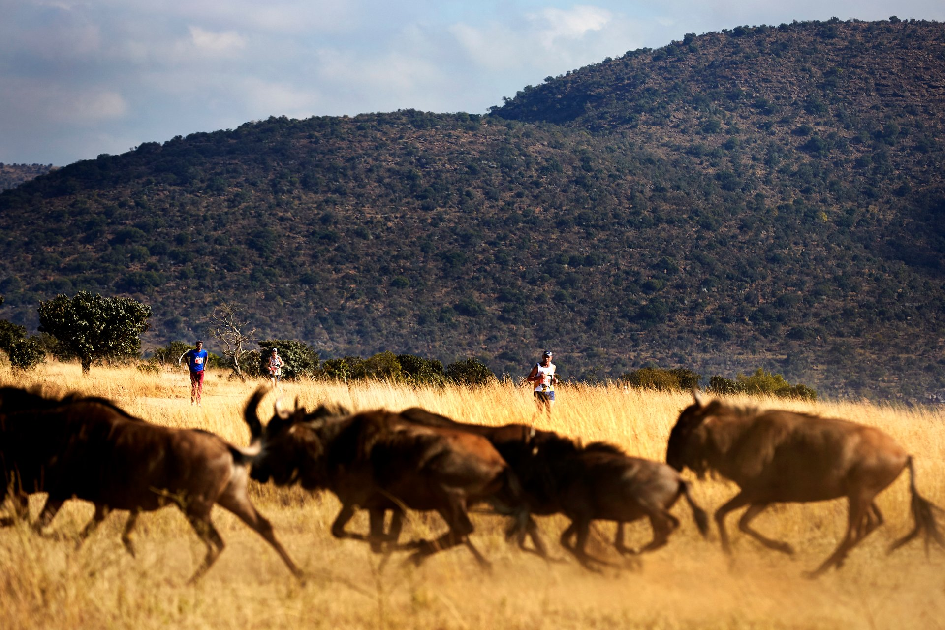 Big Five Marathon in South Africa - Best Season 2019