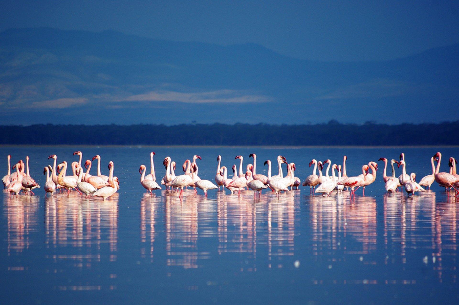 Lake Nakuru 2019
