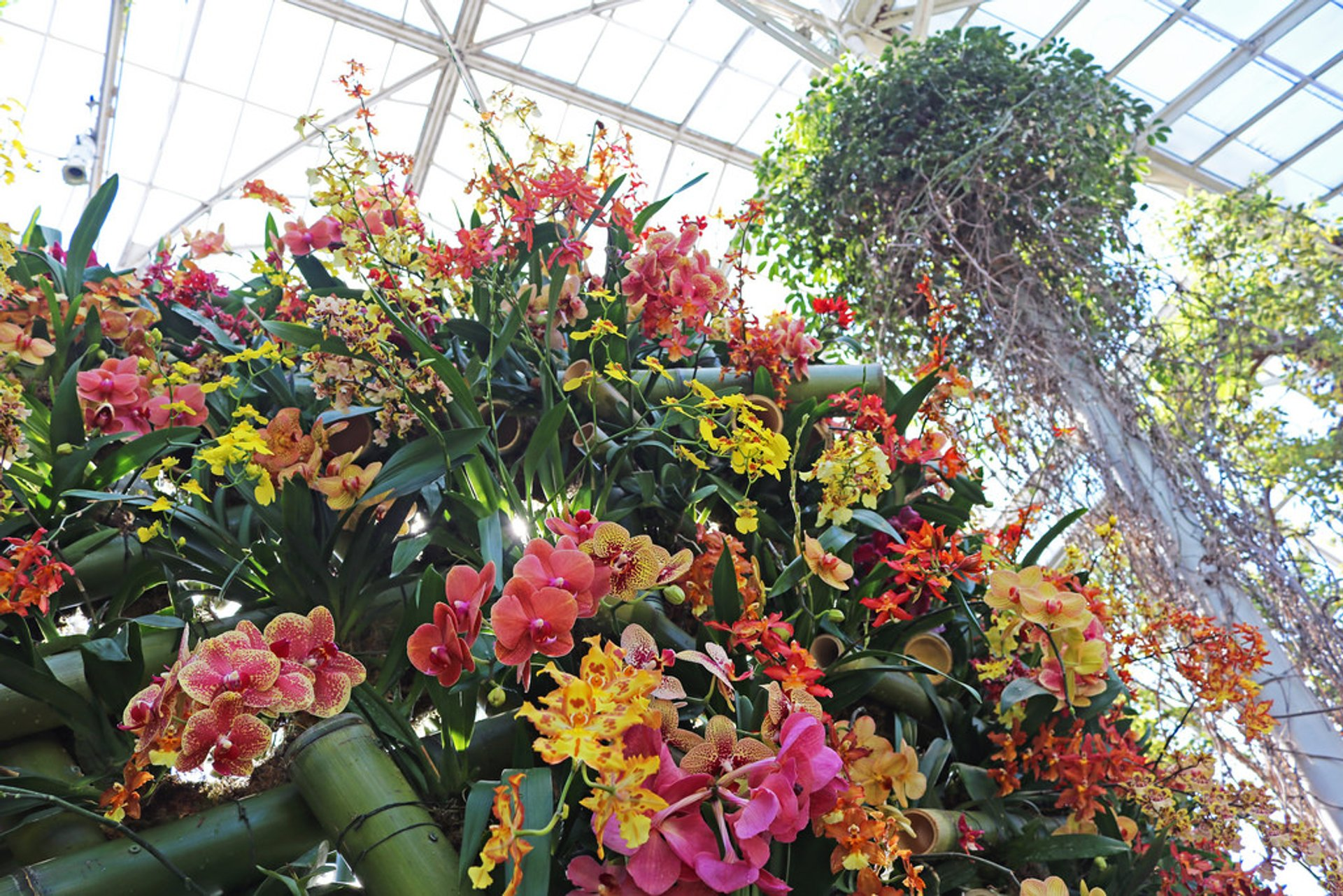 NYBG Orchid Show in New York - Best Season 2020