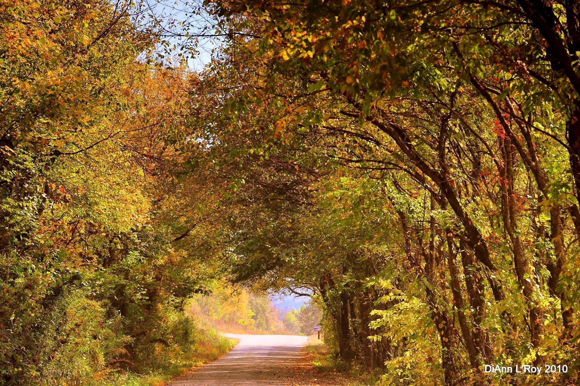 Arkansas Fall Foliage in Arkansas - Best Season 2020