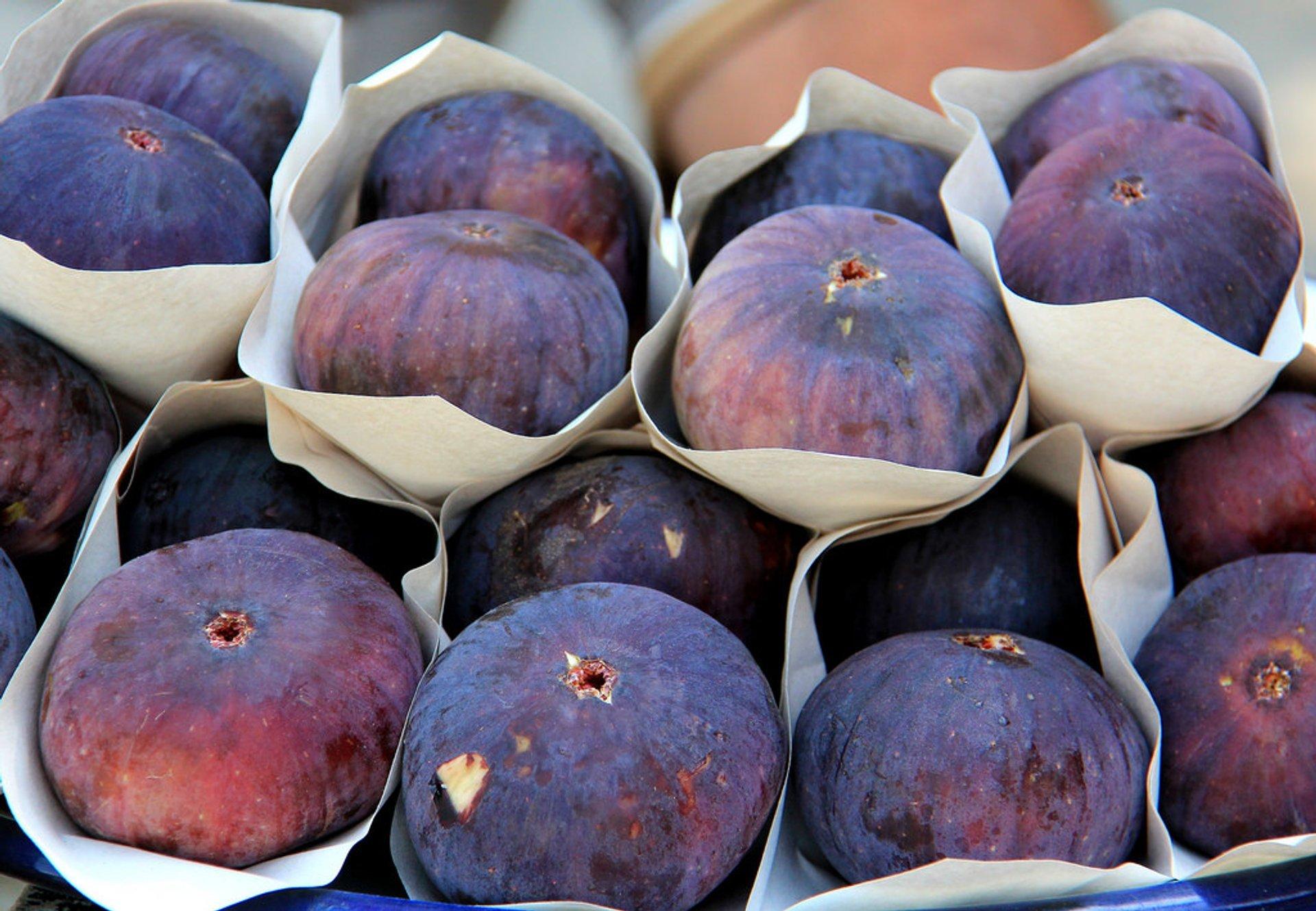 Fresh Figs in Turkey 2019 - Best Time