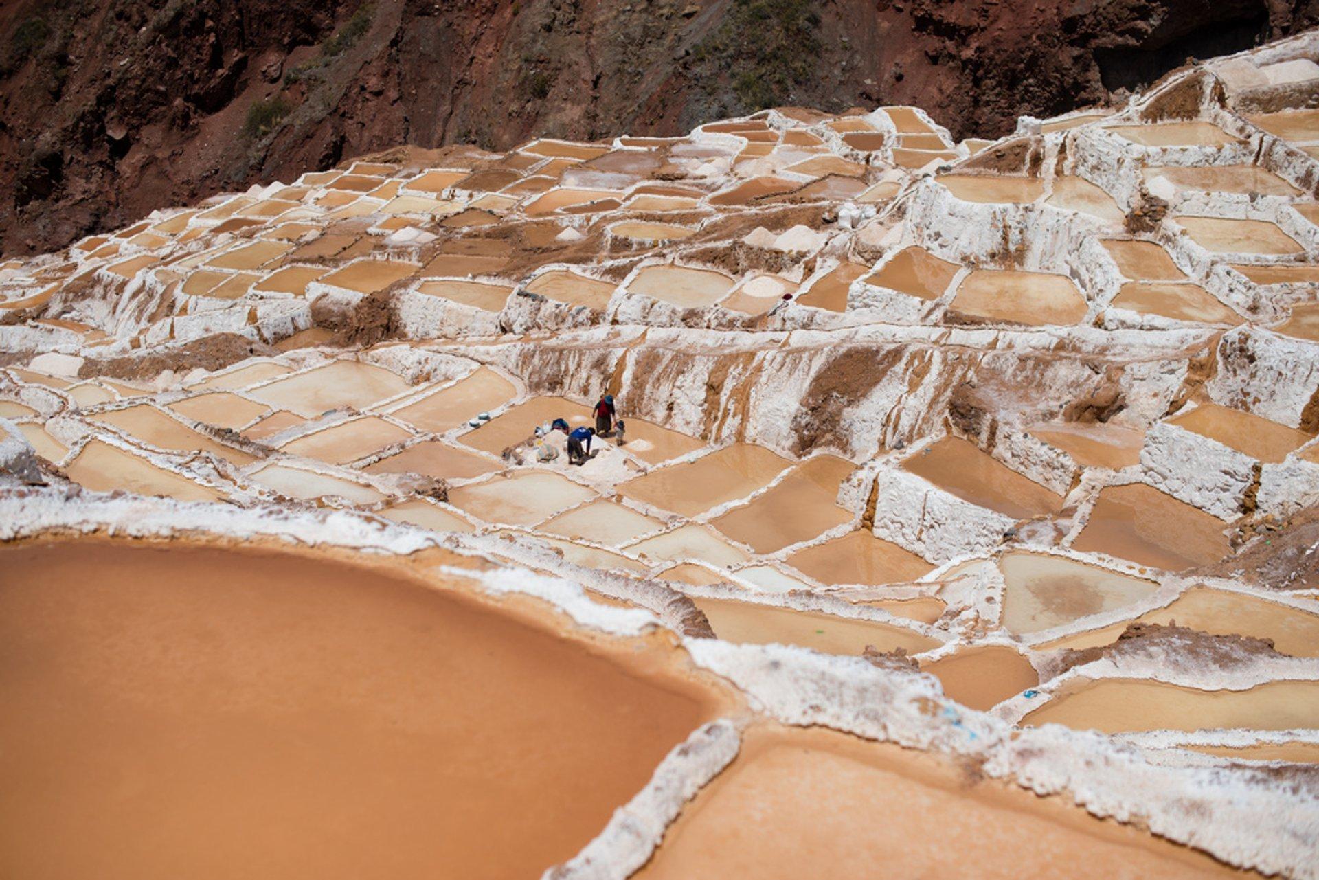 Best time for Salt Harvest at Salinas de Maras in Peru 2020