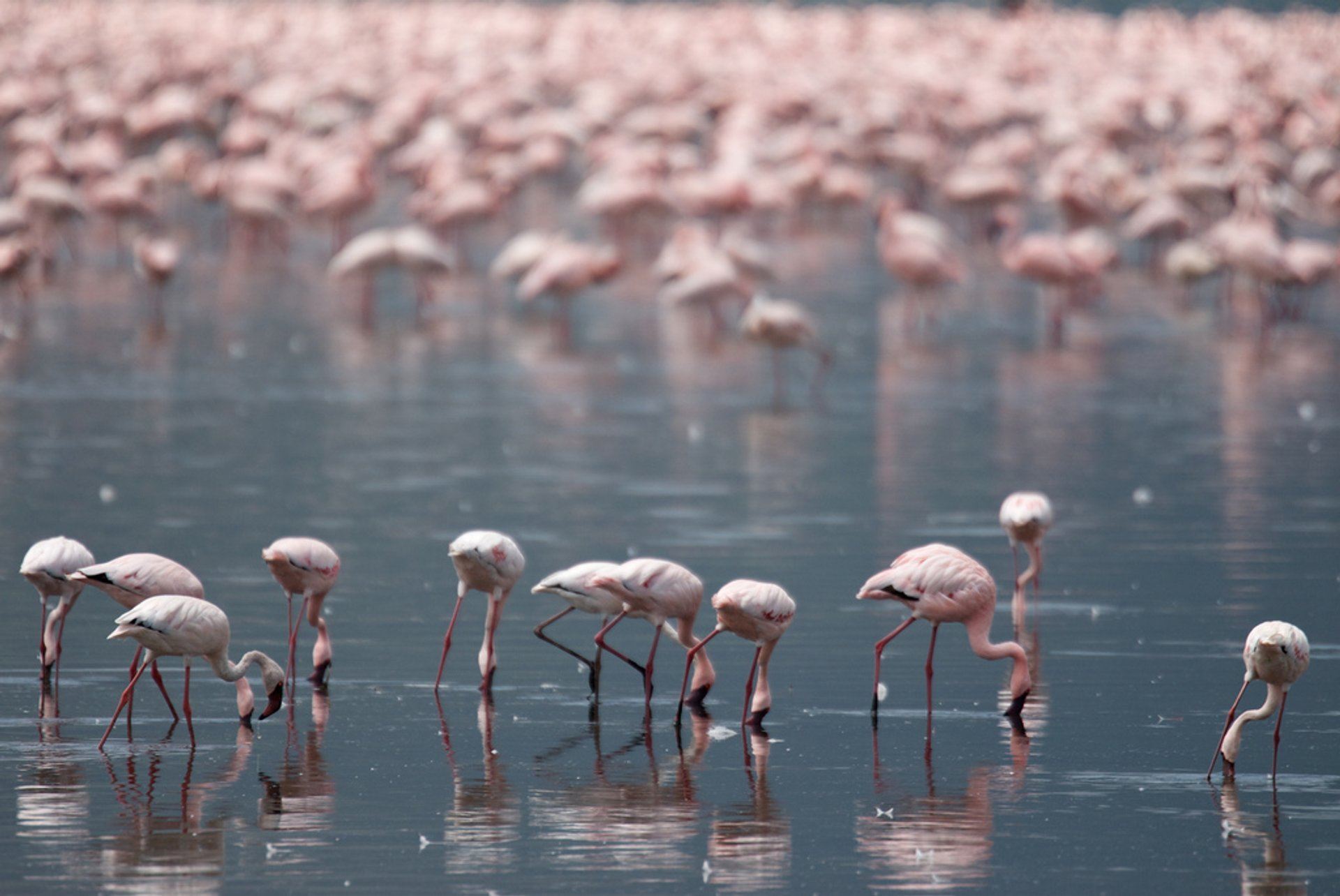 Flamingos on the Rift Valley Lakes in Kenya - Best Season 2019