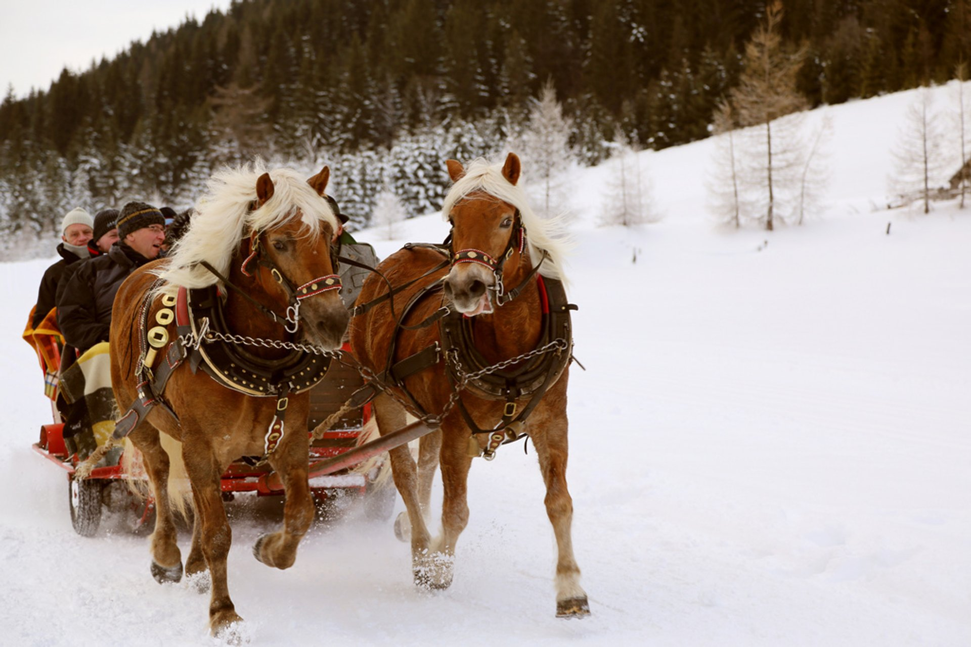 Winter Horse and Sleigh Ride in Austria - Best Season 2020