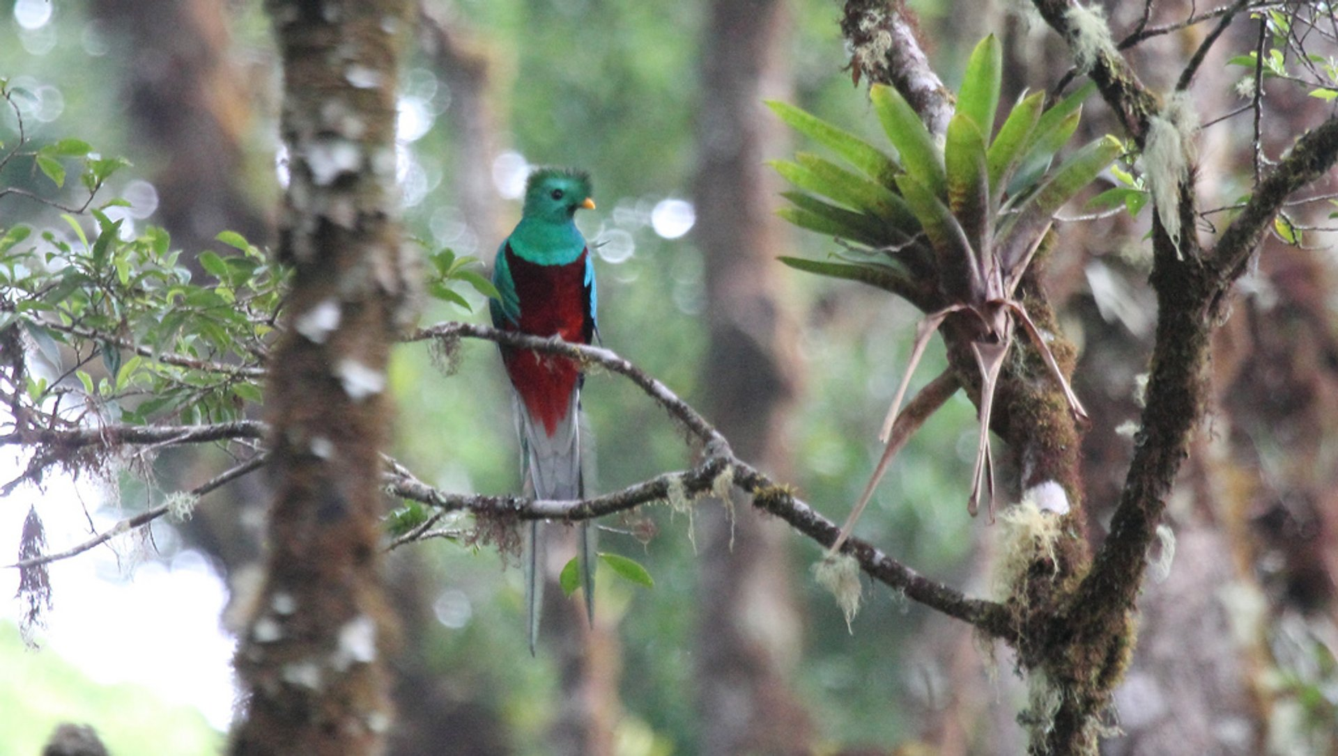 Best time to see Resplendent Quetzal in Costa Rica 2019