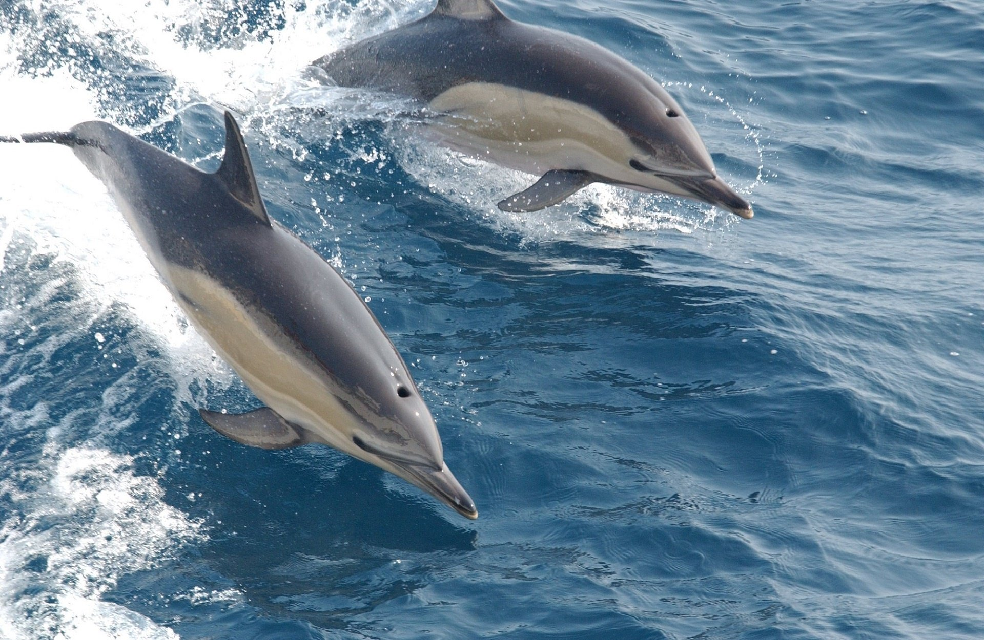 Dolphin Watching in England 2019 - Best Time