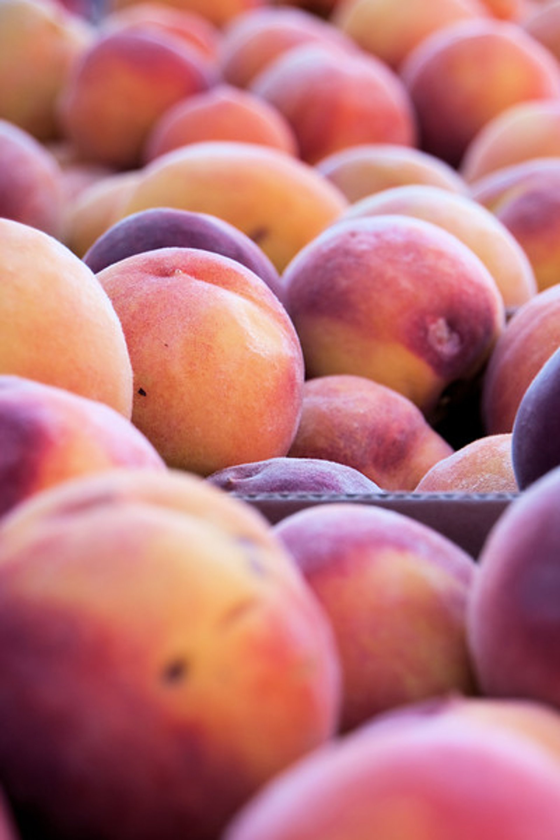 Brigham City Peach Days in Utah - Best Season 2019