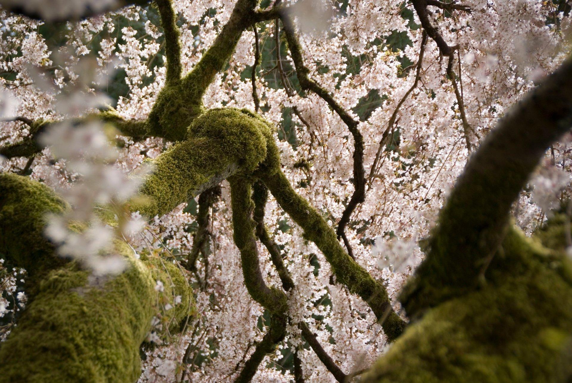 Washington Park Arboretum 2020
