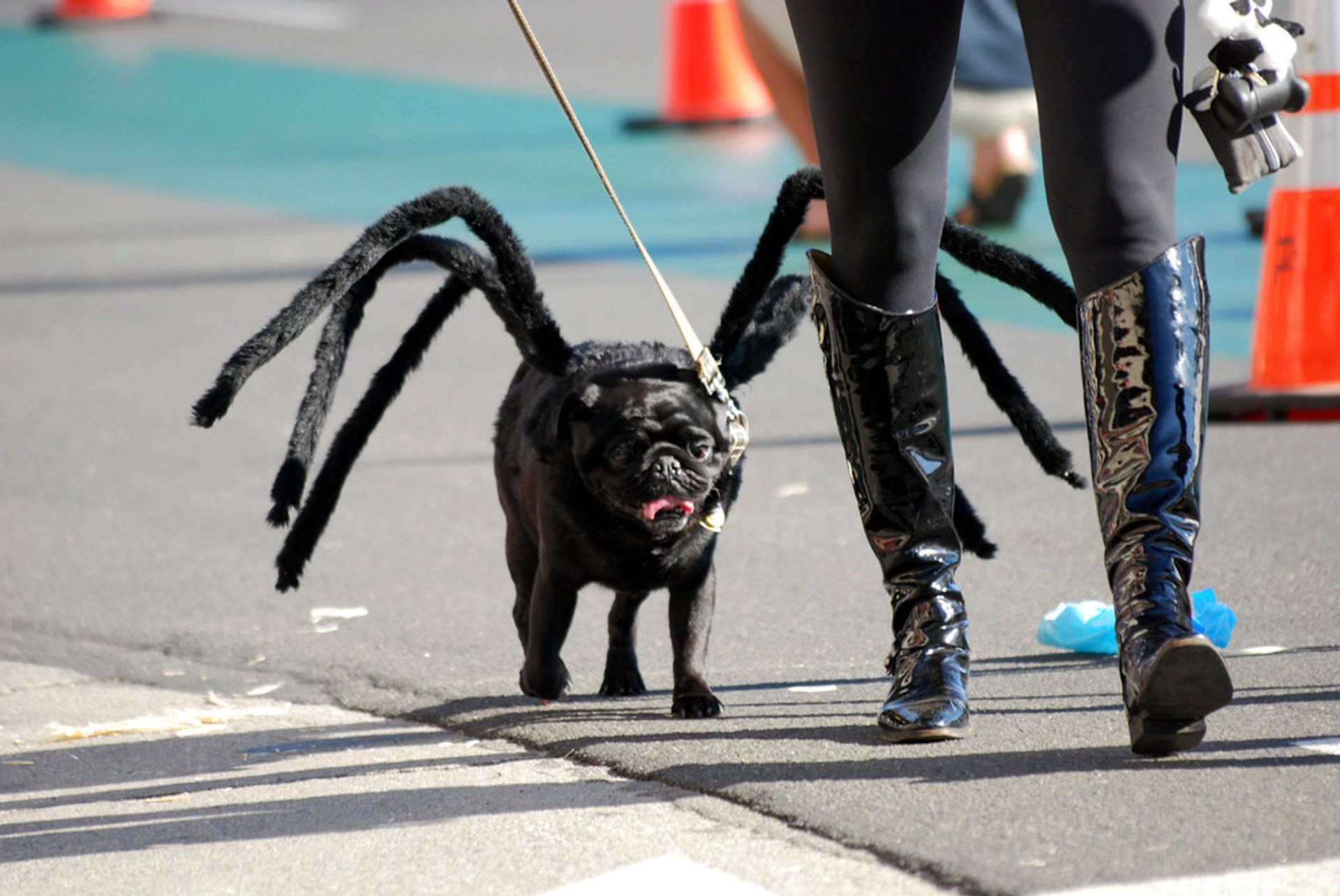 Tompkins Square Halloween Dog Parade in New York - Best Season