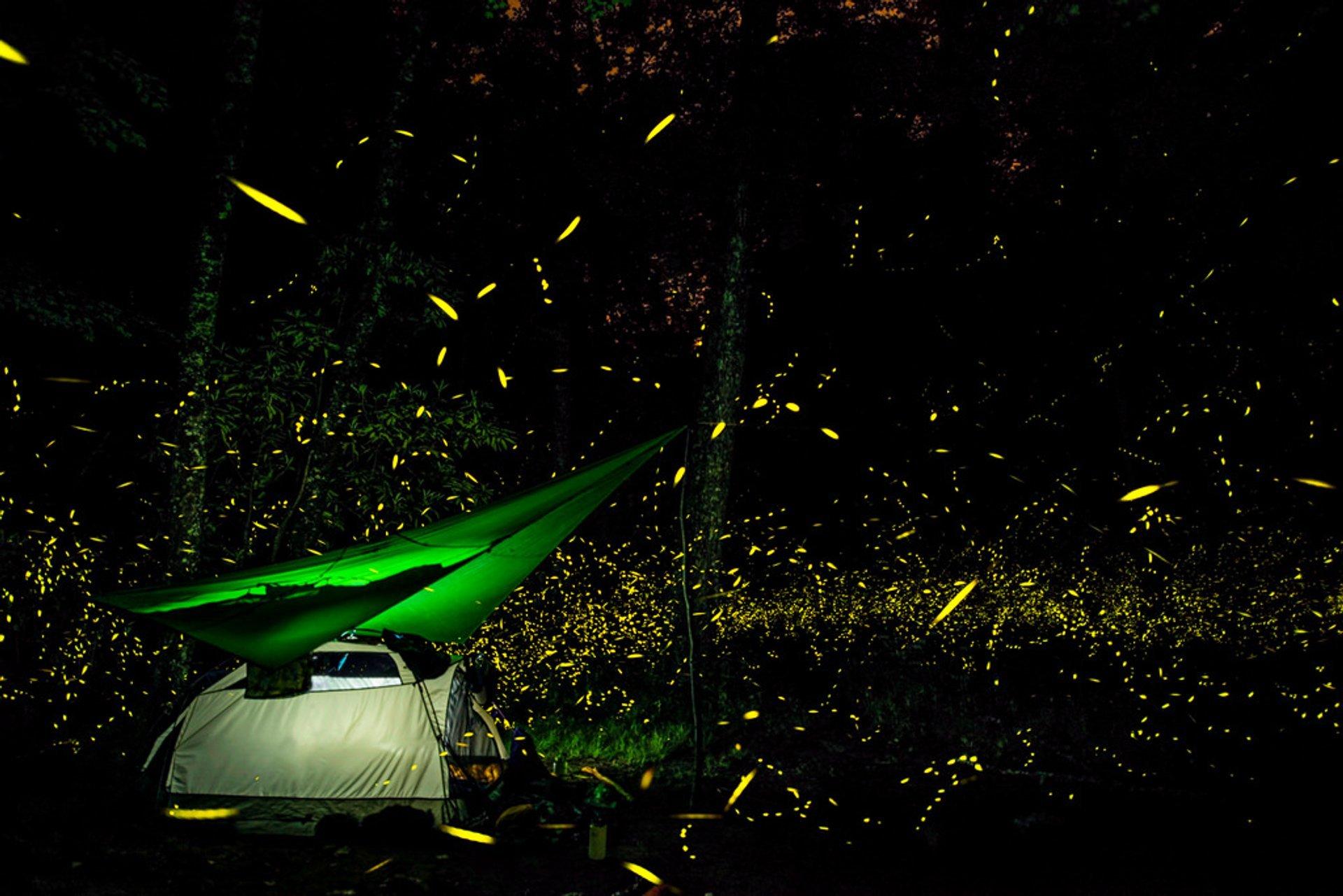 Fireflies of Elkmont 2020