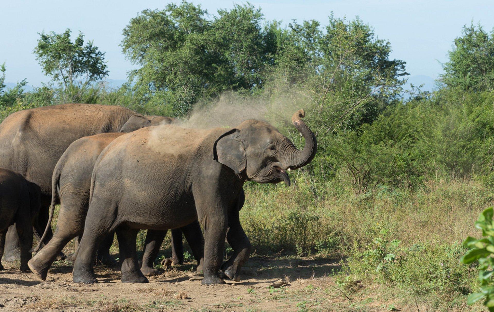 Elephant Safari in Udawalawe National Park in Sri Lanka 2020 - Best Time