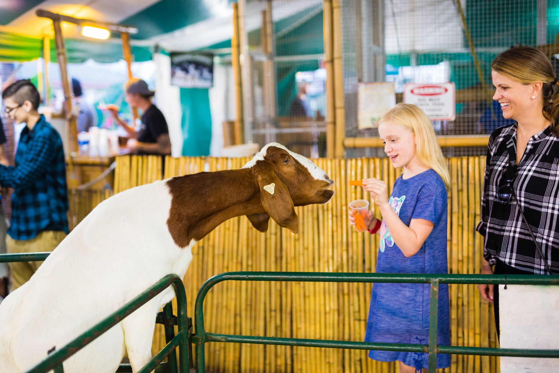 South Carolina State Fair in South Carolina - Best Season 2020