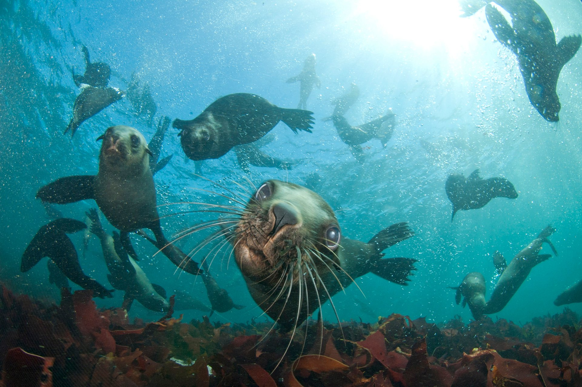 Seal Snorkeling in Cape Town 2020 - Best Time