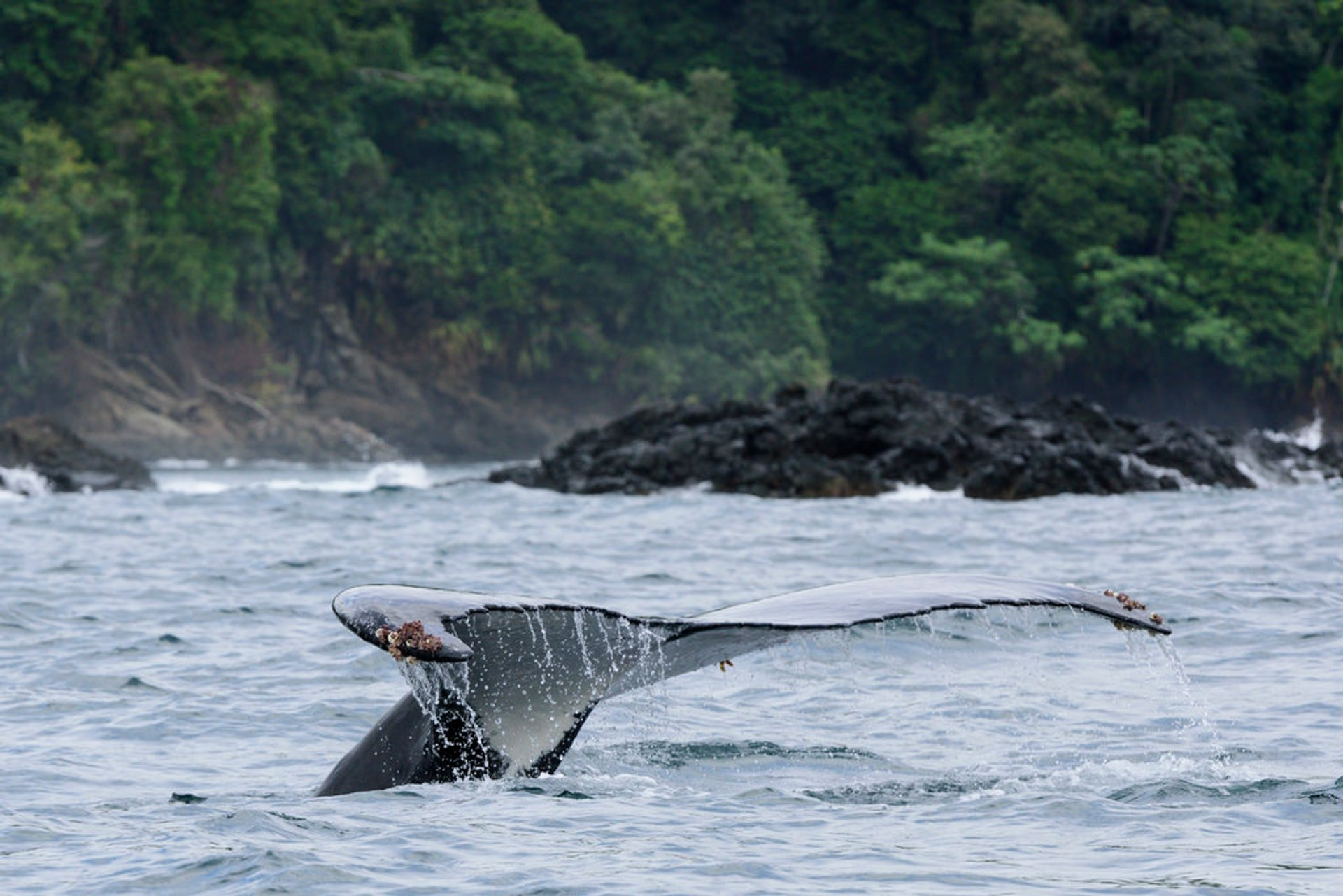 Best time to see Humpback Whales in Colombia 2020