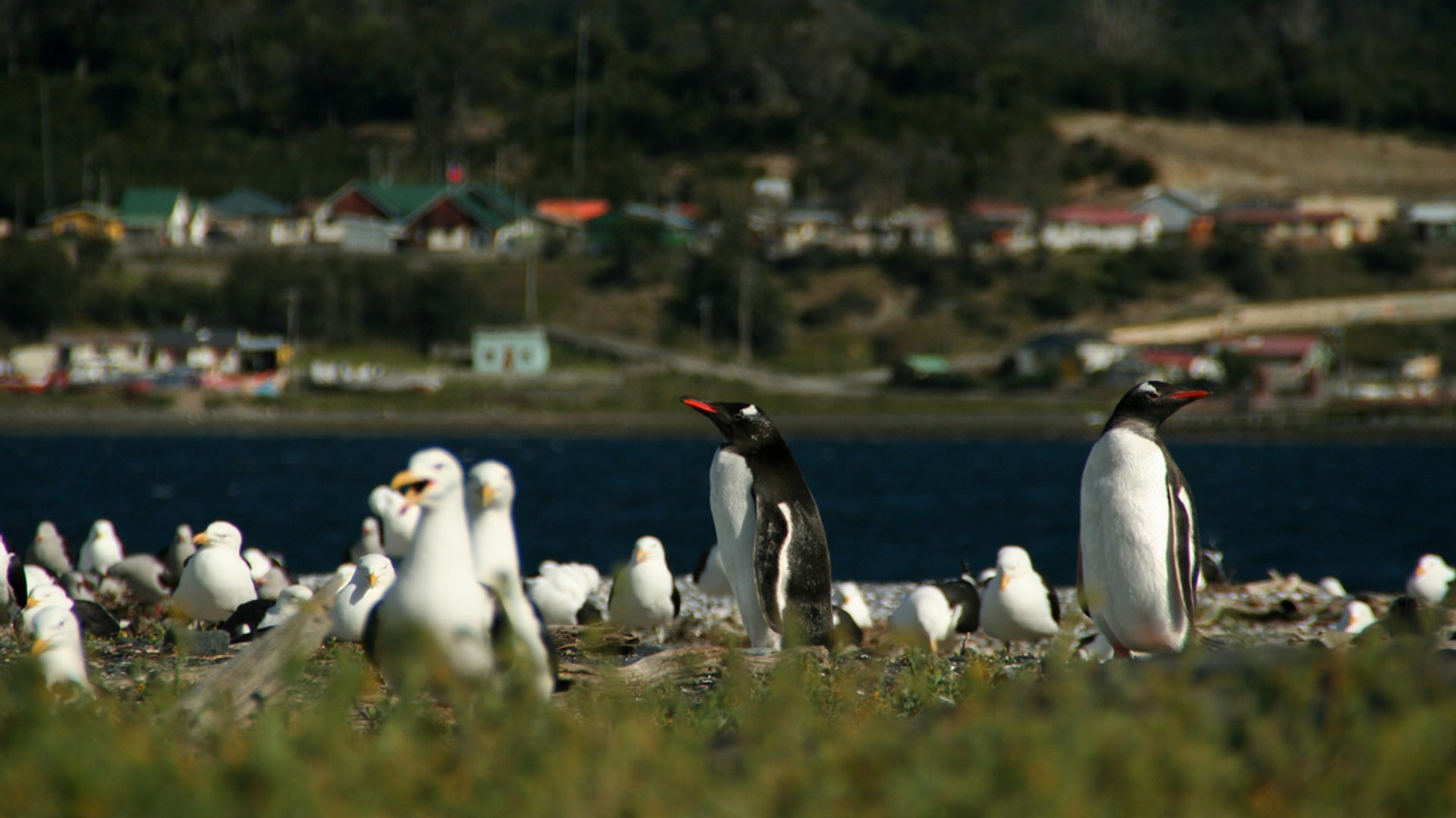 Penguin Safari in Chile - Best Season