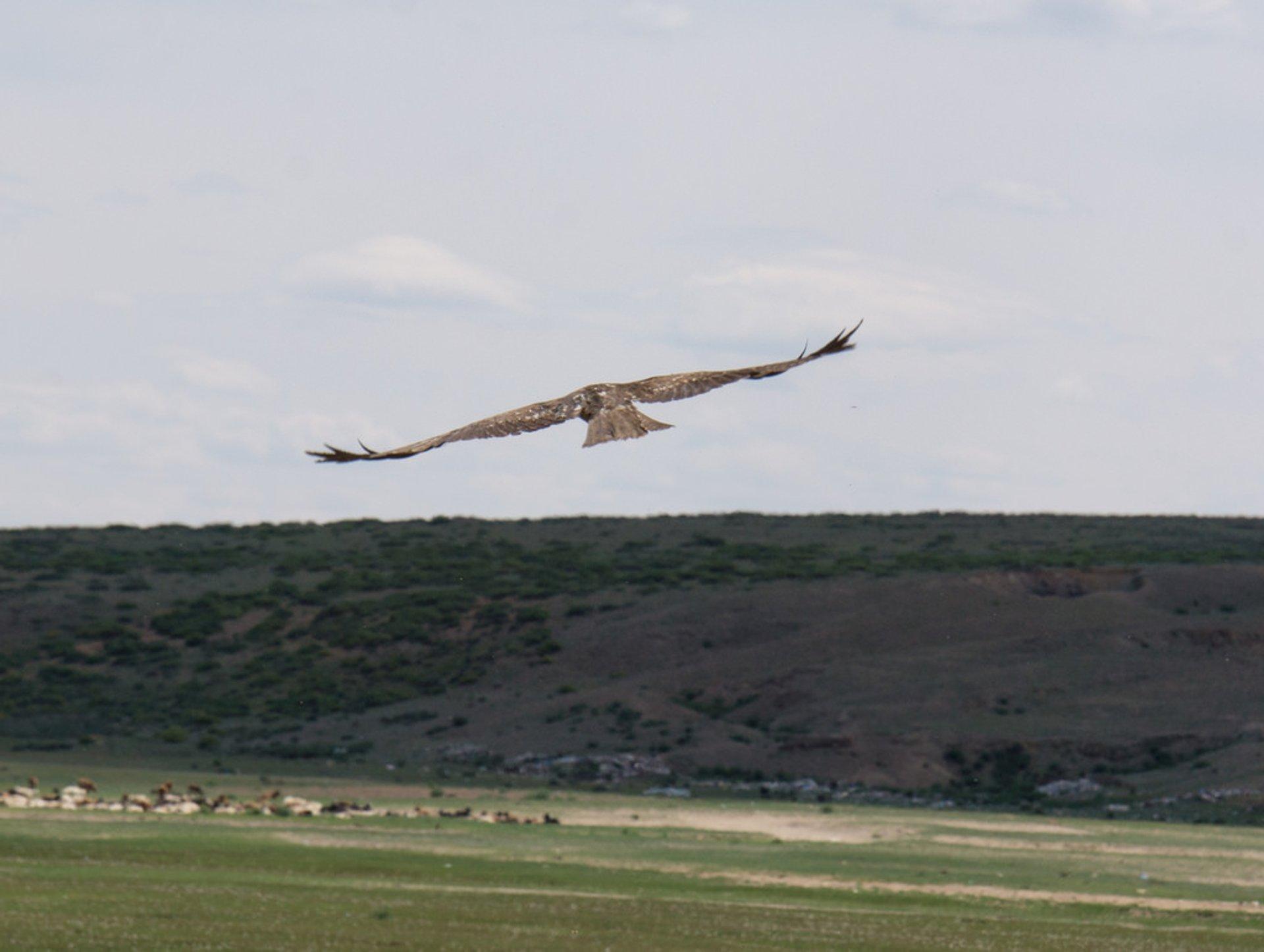 Eagle 2020
