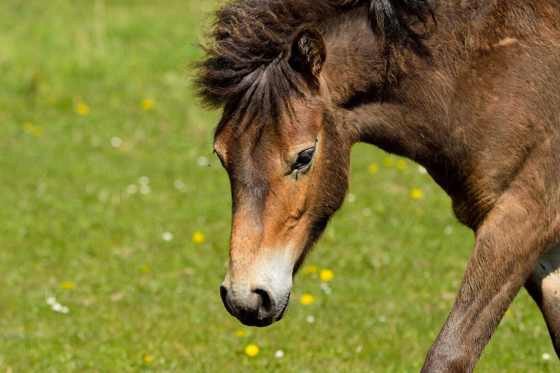 Wild Horses in Denmark - Best Season 2020