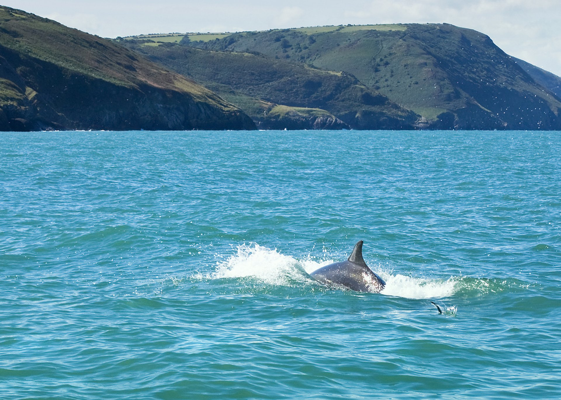 Best time for Bottlenose Dolphins in Cardigan Bay in Wales 2020