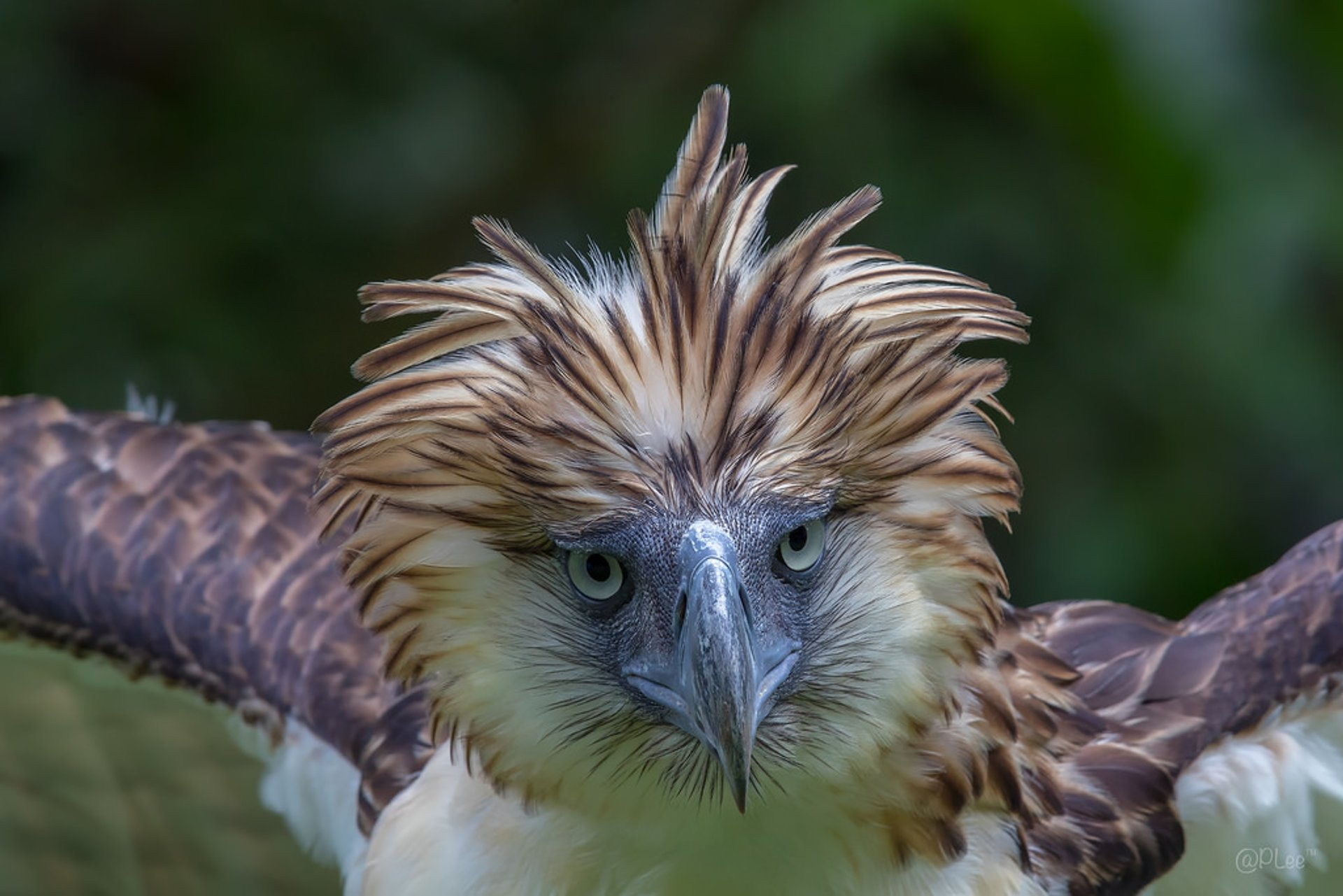 Best time for Philippine Eagle in Philippines