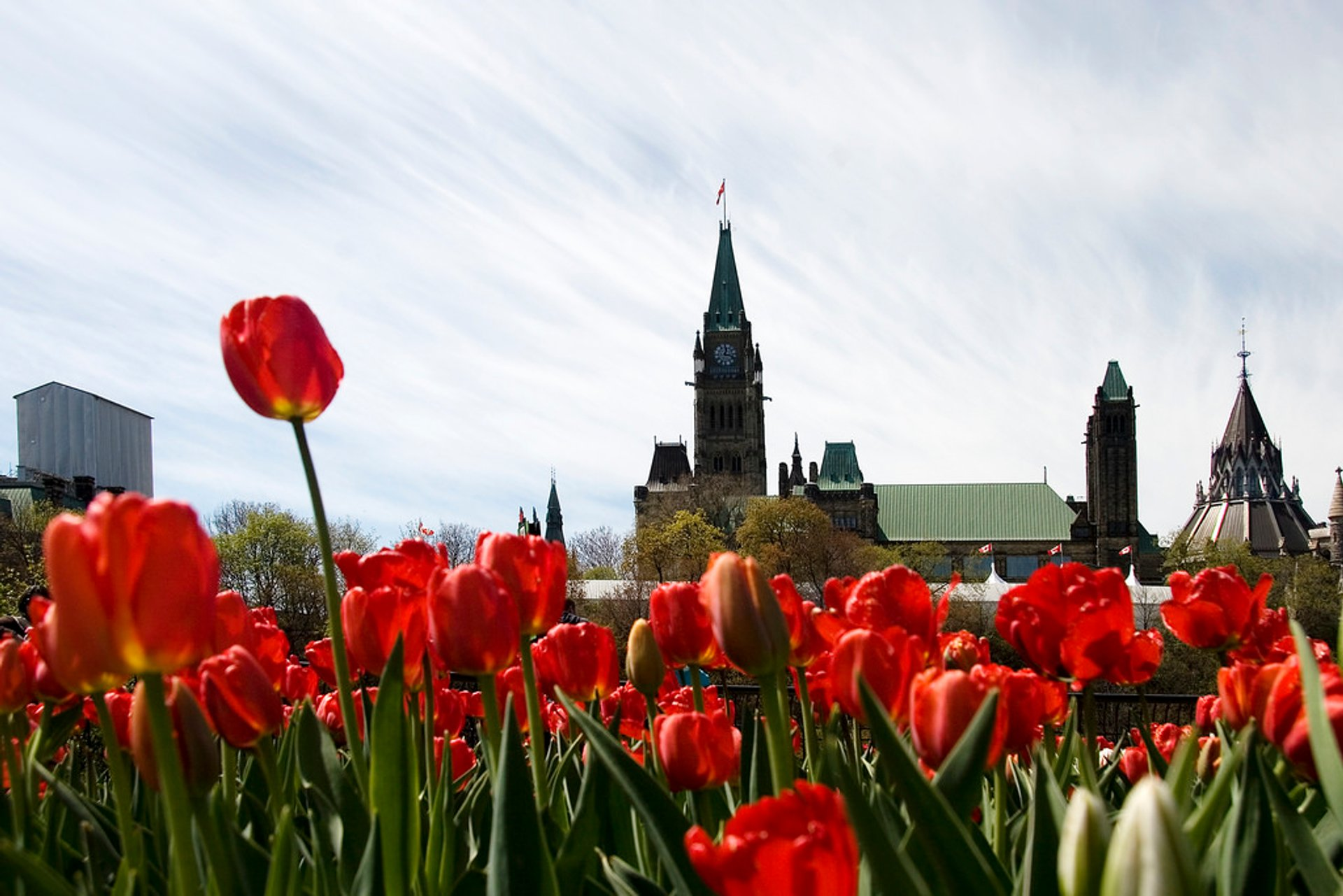 Best time for Canadian Tulip Festival (Festival Canadien des Tulipes) in Ottawa 2020