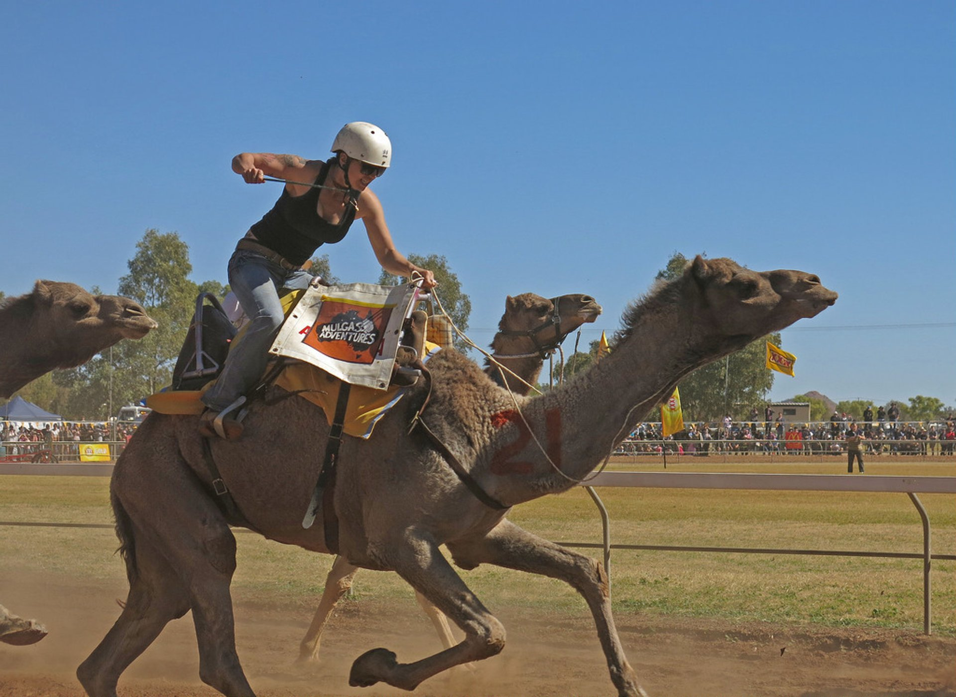 Alice Springs Camel Cup in Northern Territory - Best Season 2020