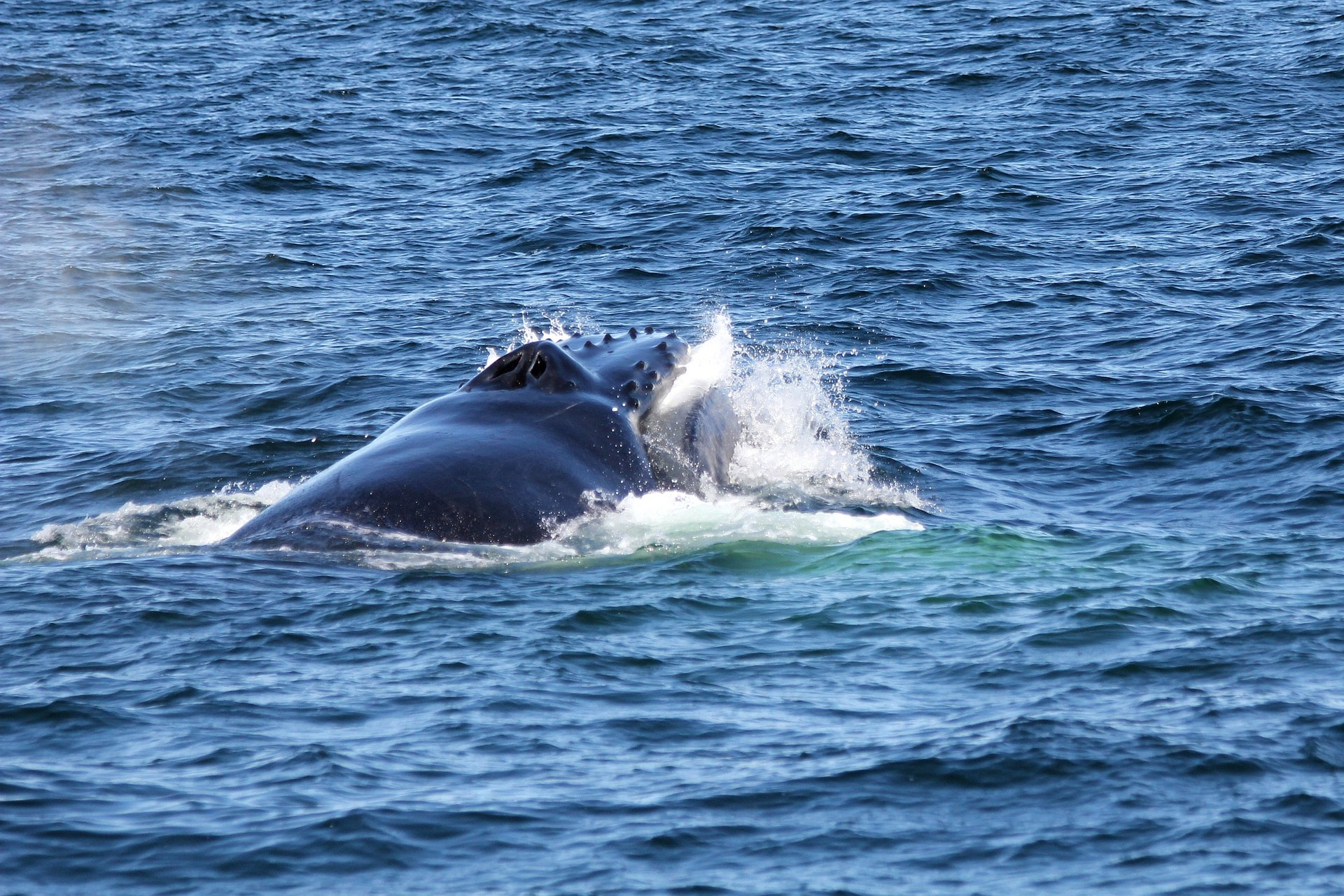 Whale Watching in New Hampshire 2020 - Best Time