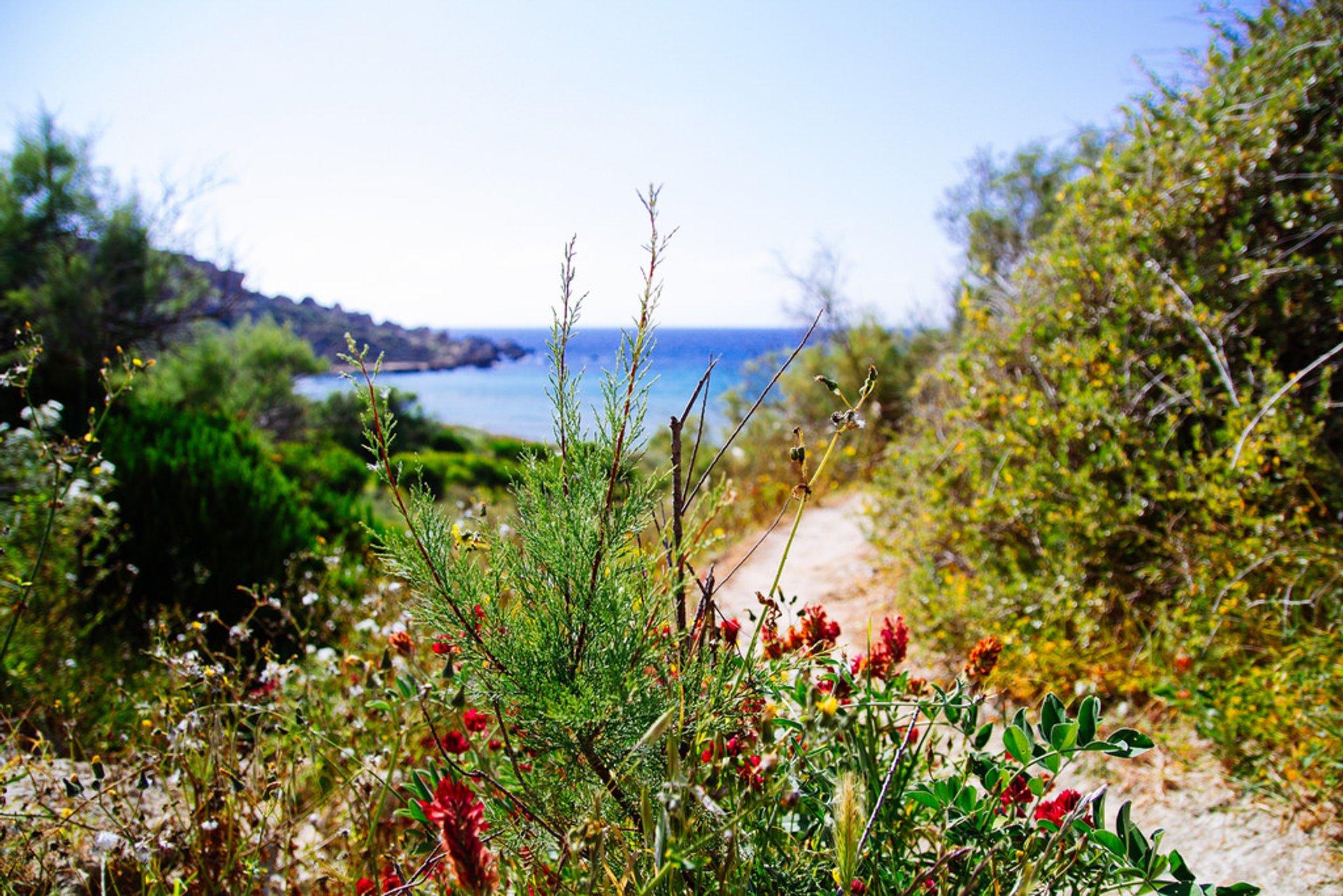 Spring in Malta 2020 - Best Time