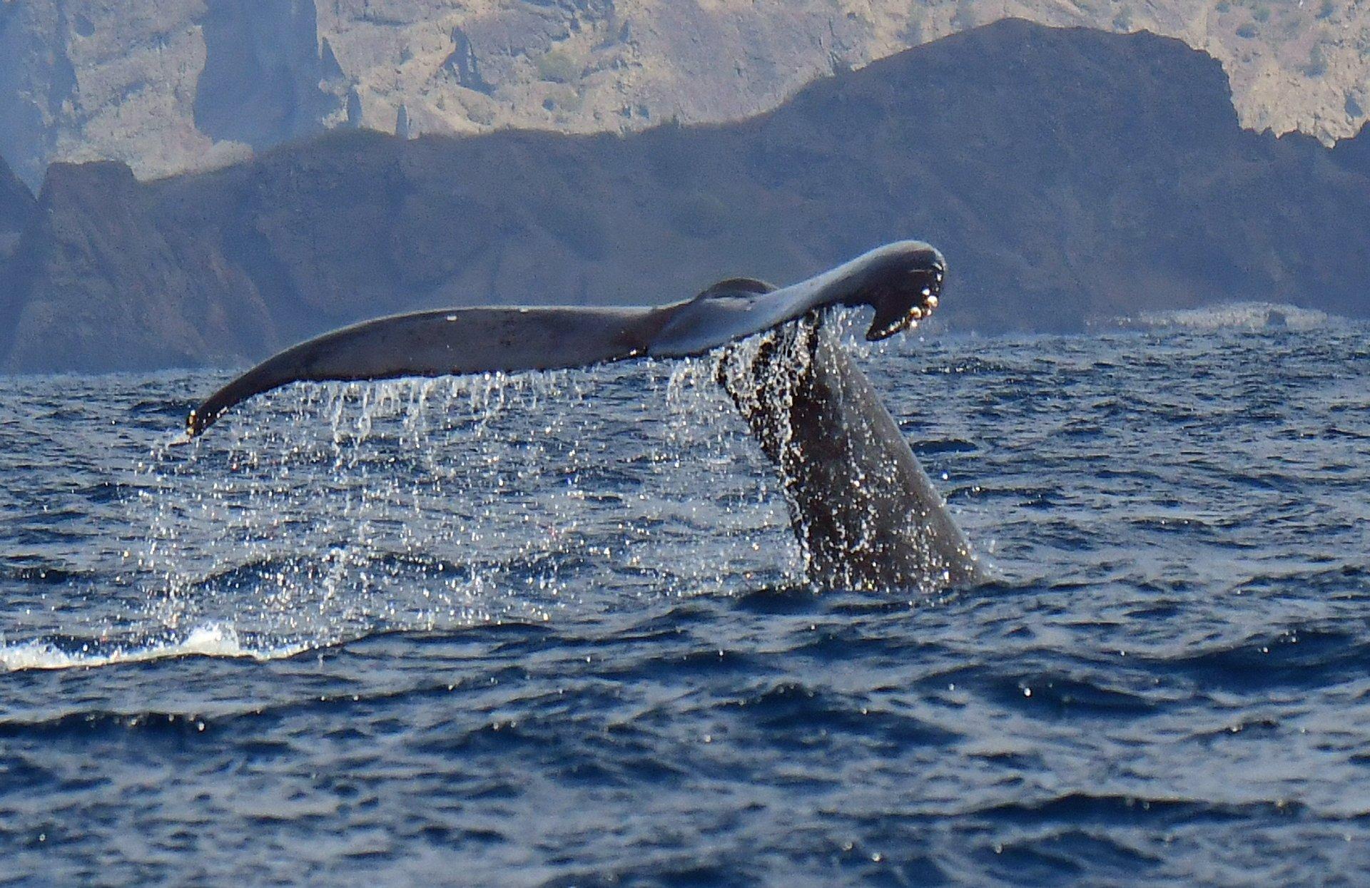 Whale watching in Chichi-jima, Bonin Island 2020