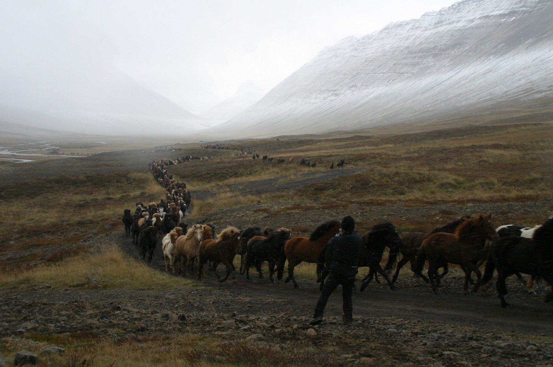 Laufskálarétt in Iceland - Best Season 2019