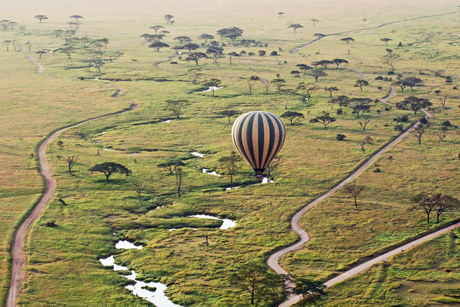 Best time to see Safari in Tanzania 2019