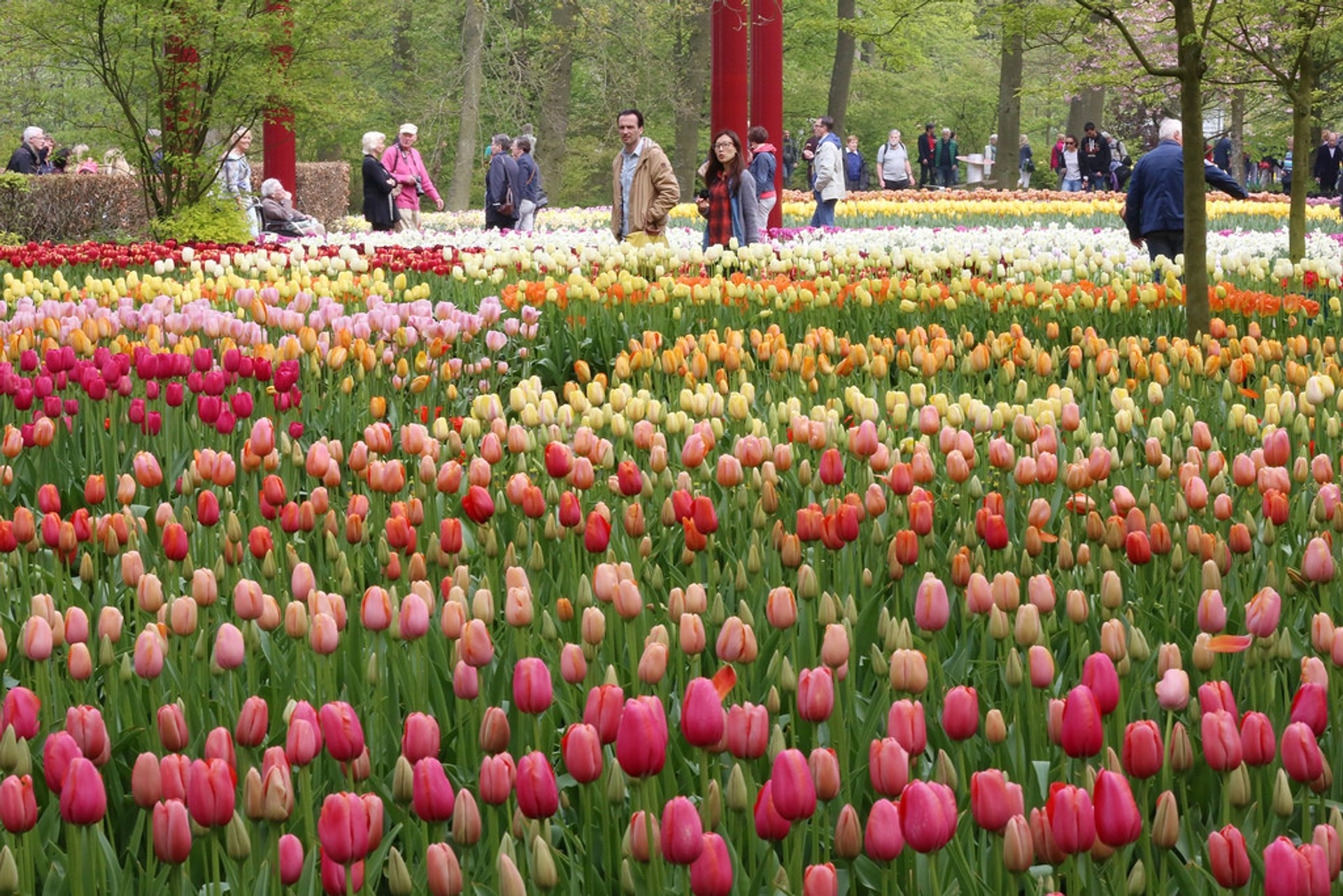 Best time to see Keukenhof (Garden of Europe) in The Netherlands 2020
