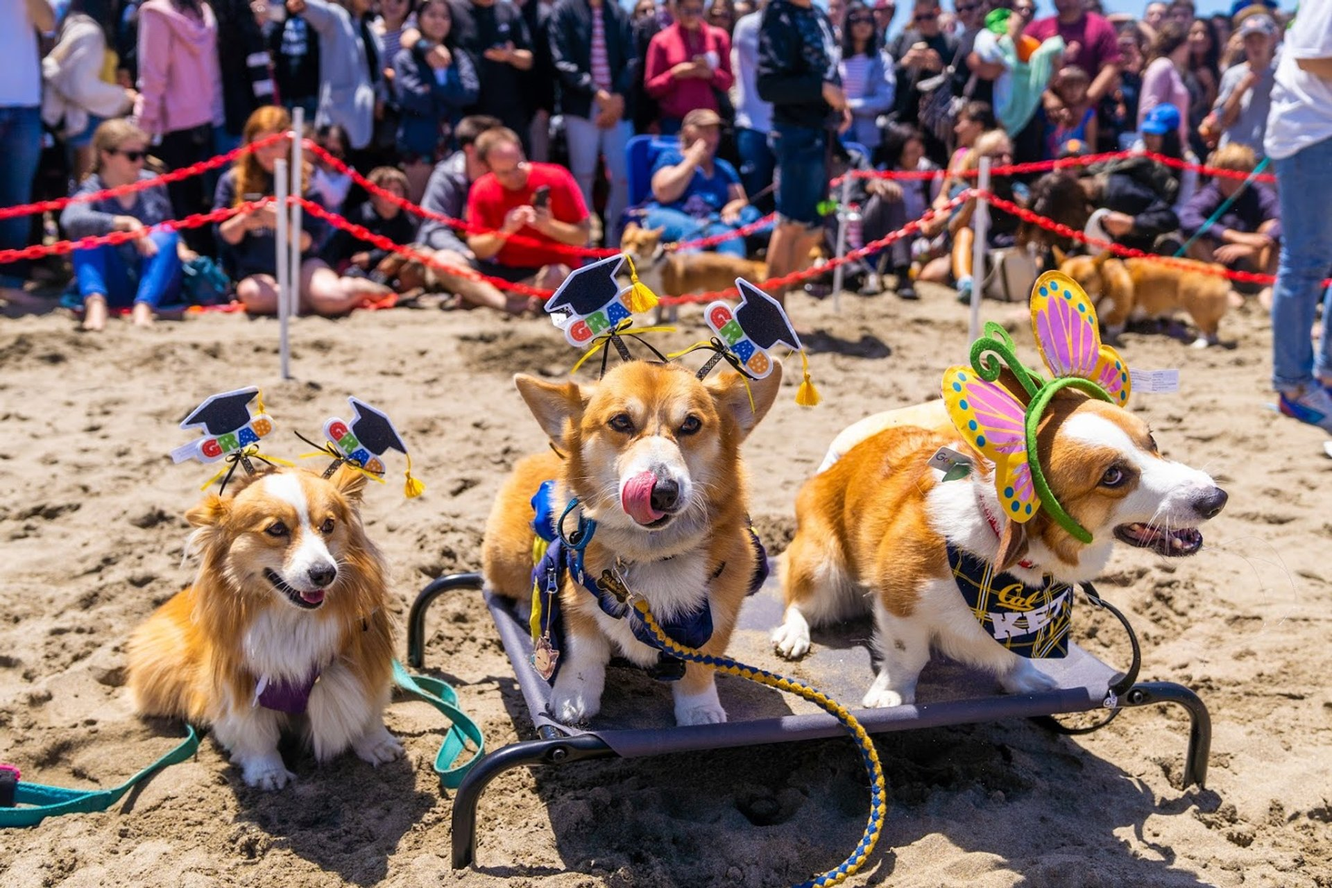 Best time for Corgi Con SF 2020