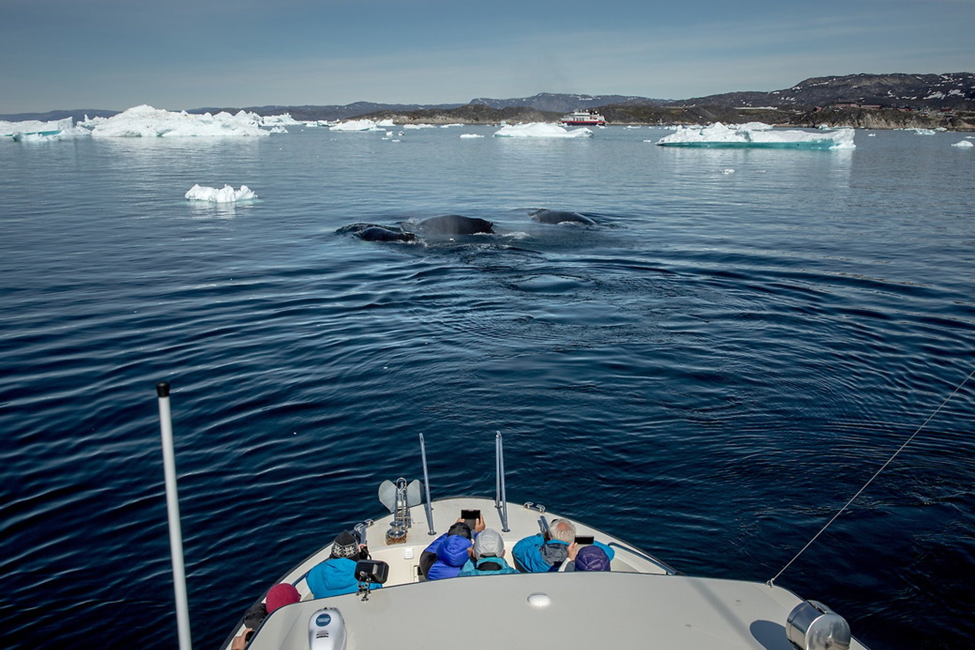 Whale Watching in Greenland 2020 - Best Time