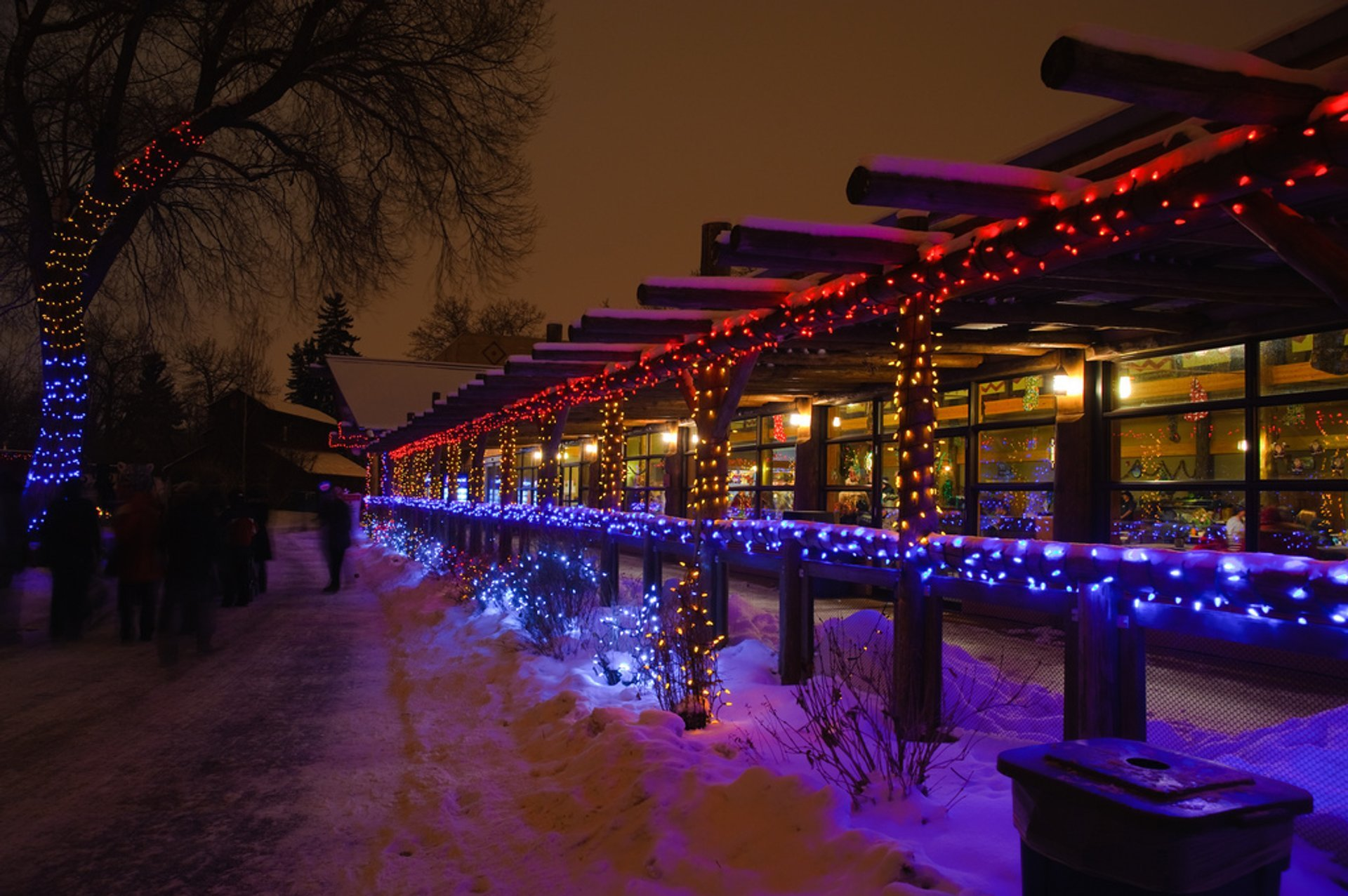Best time for Zoo Lights in Calgary 2020